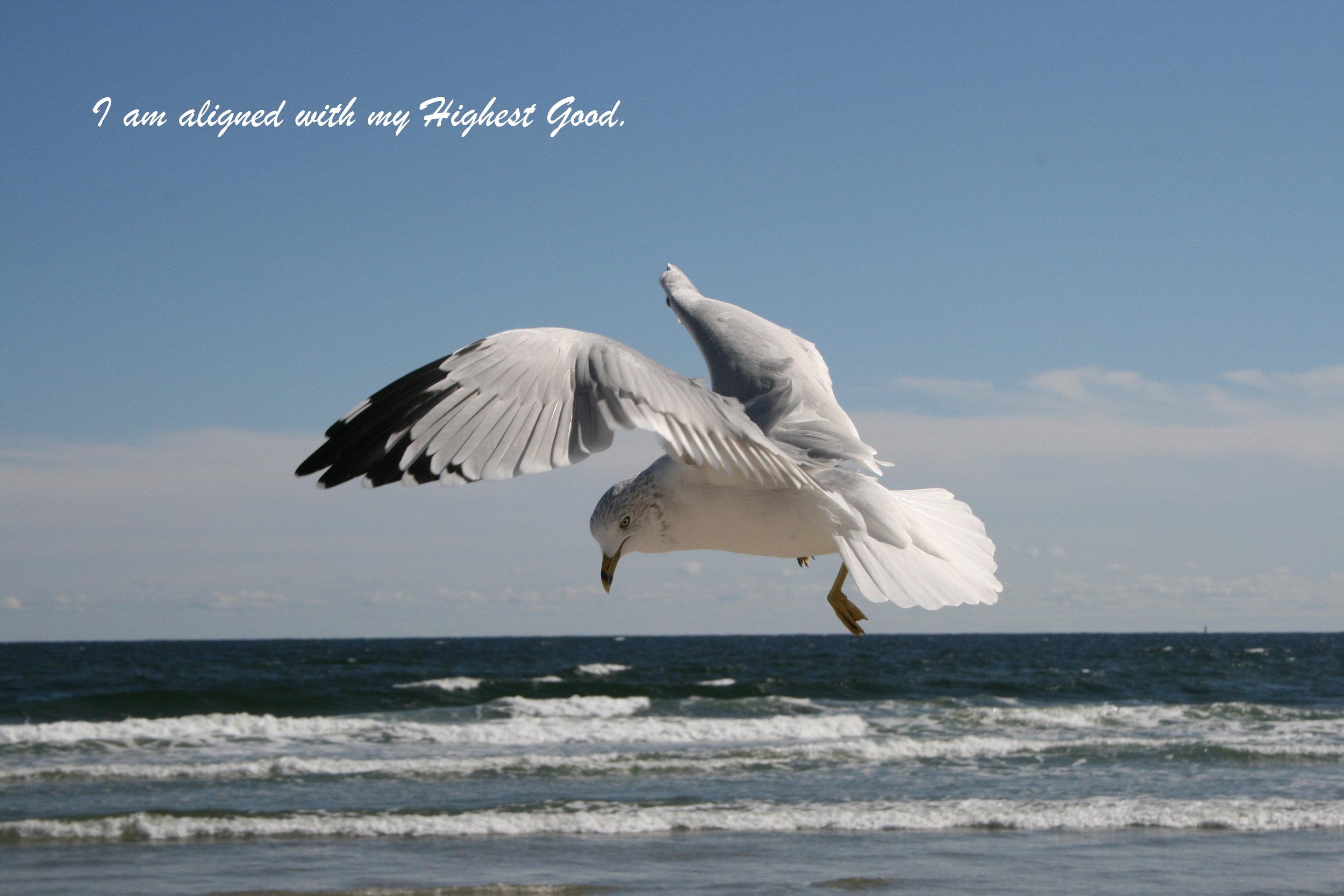 seagull highest good.jpg