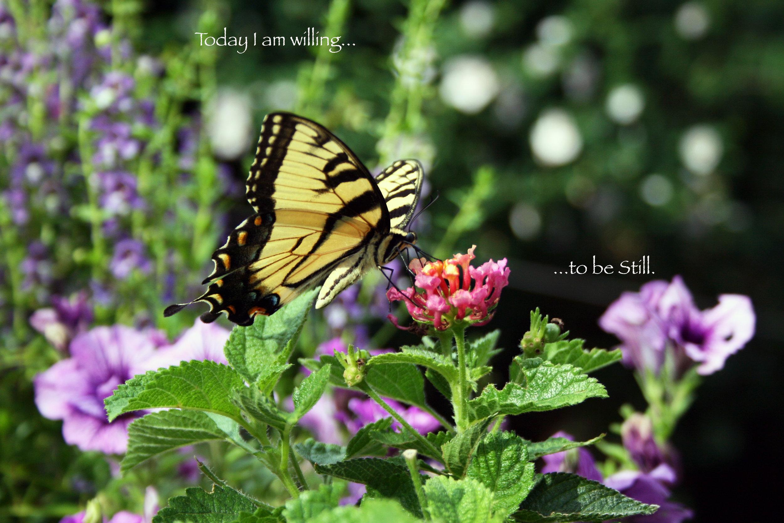 Butterfly on Lantana_Be Still.jpg