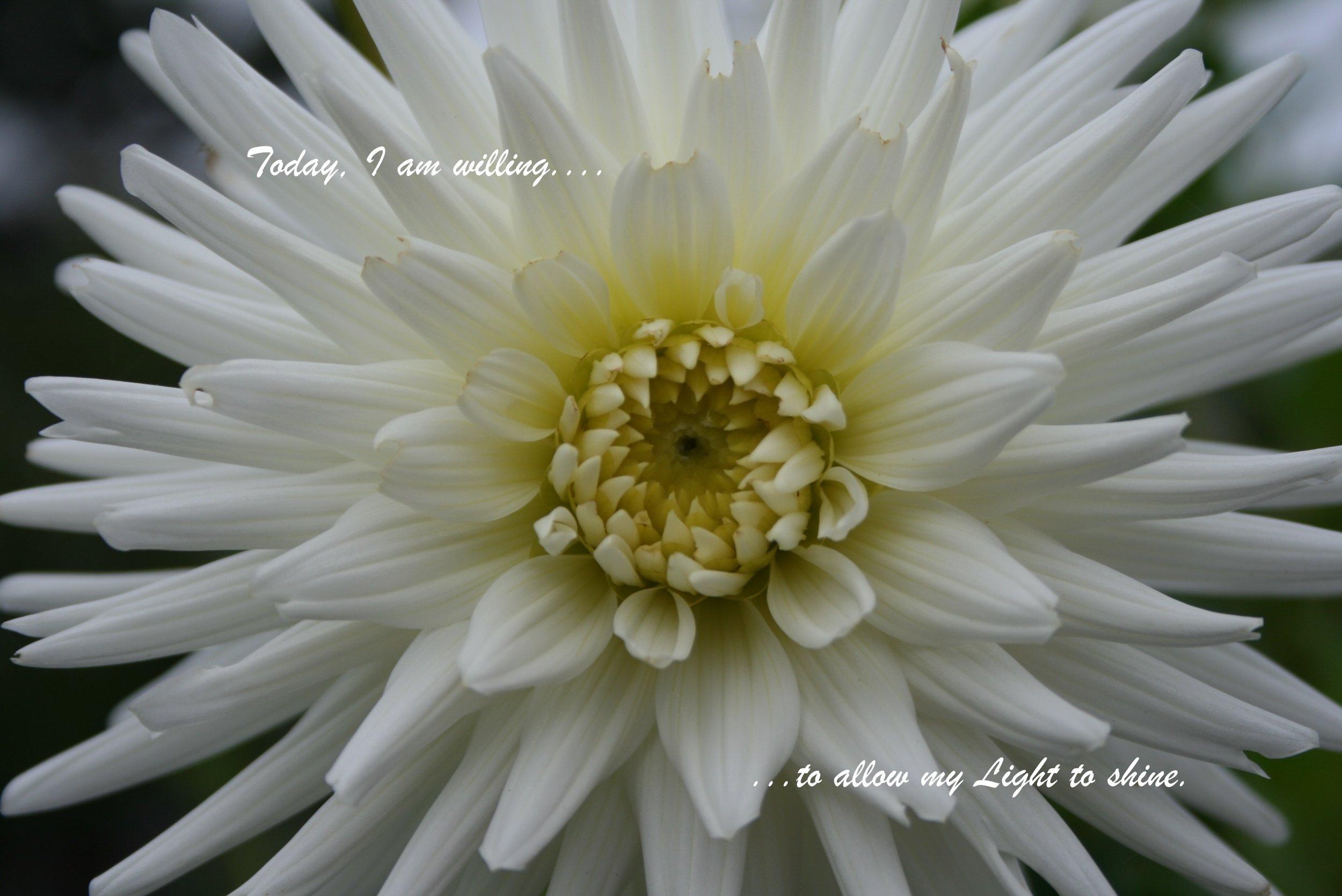 Dahlia_allow my light to shine.jpg