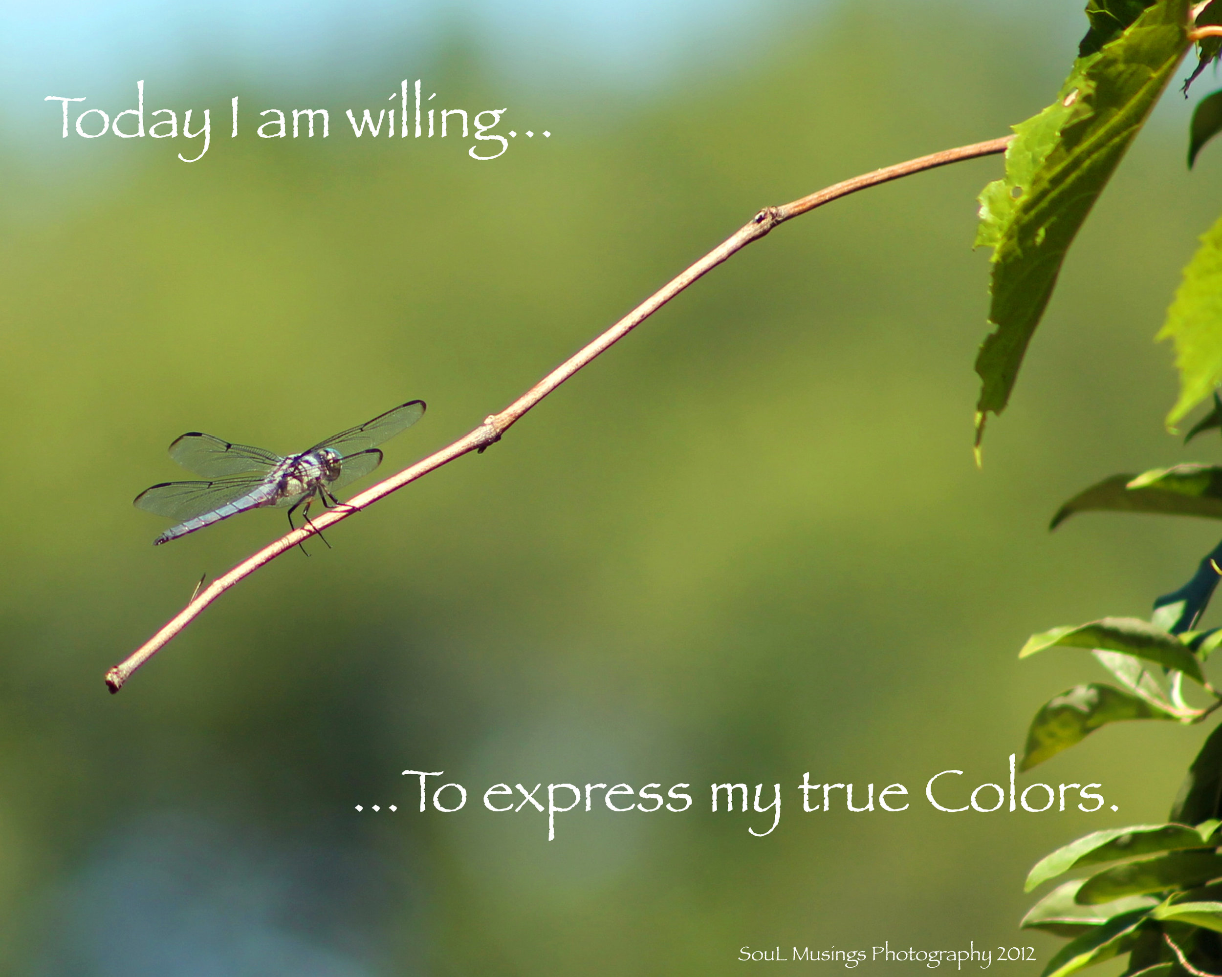 Dragonfly_colors.jpg