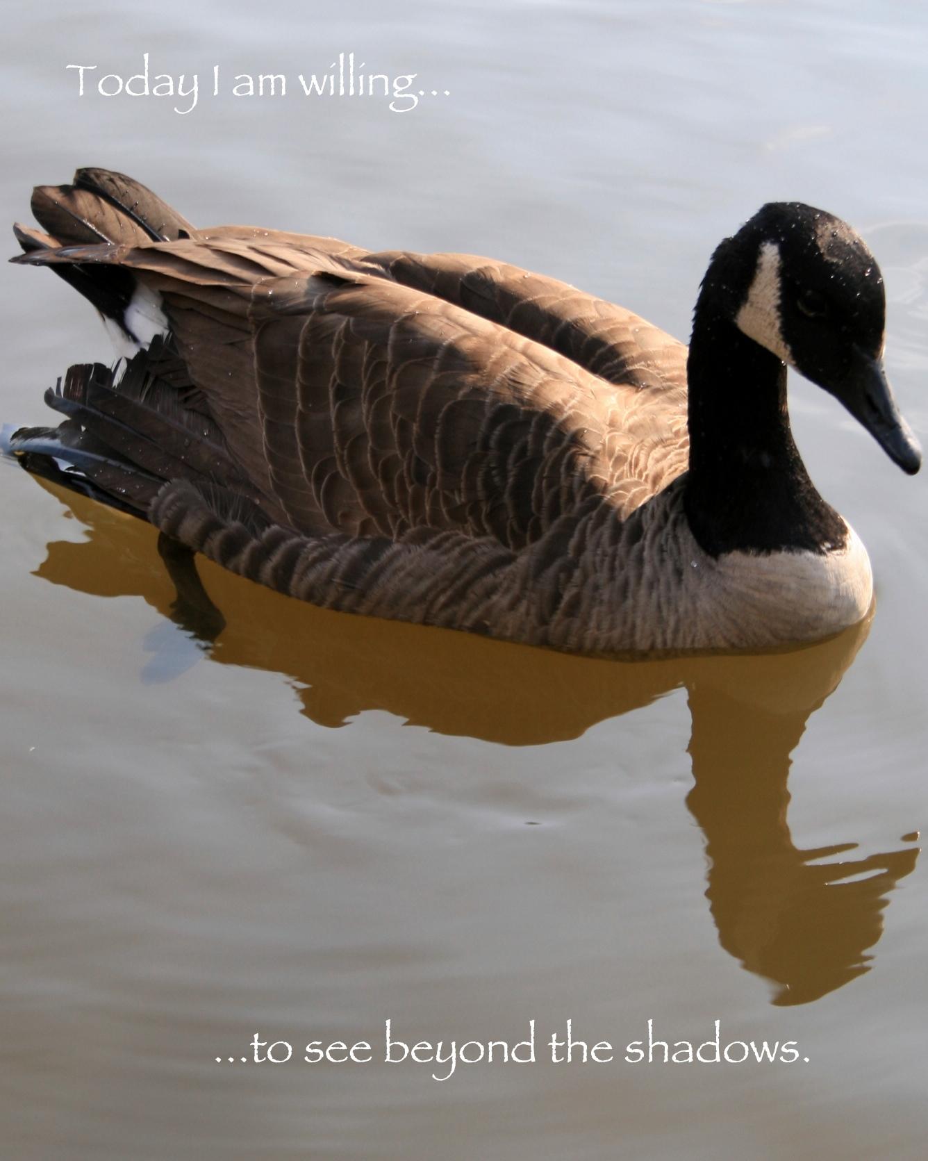 Goose_see beyond the shadows.JPG