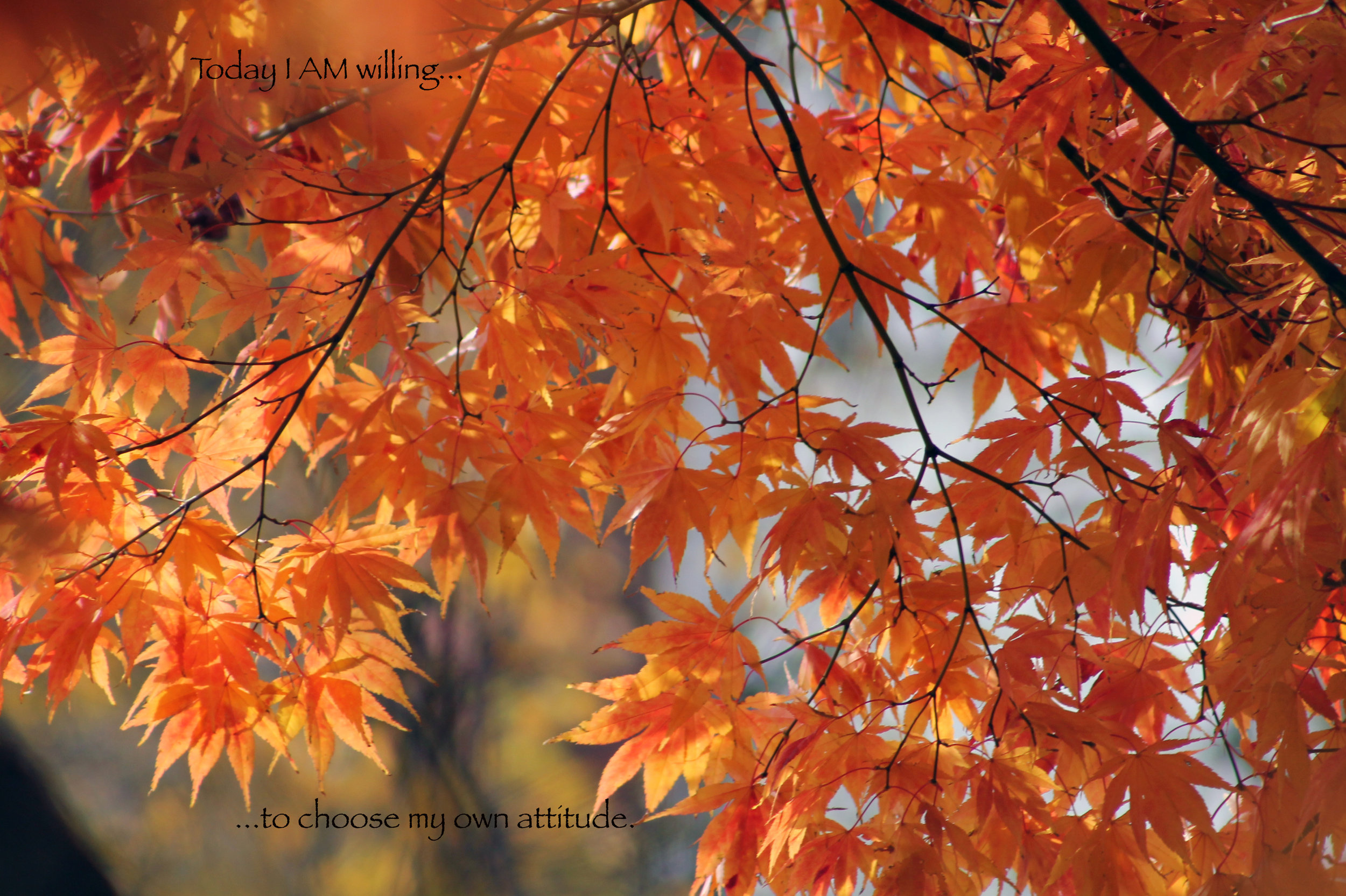 Fall leaves…choose attitude.jpg