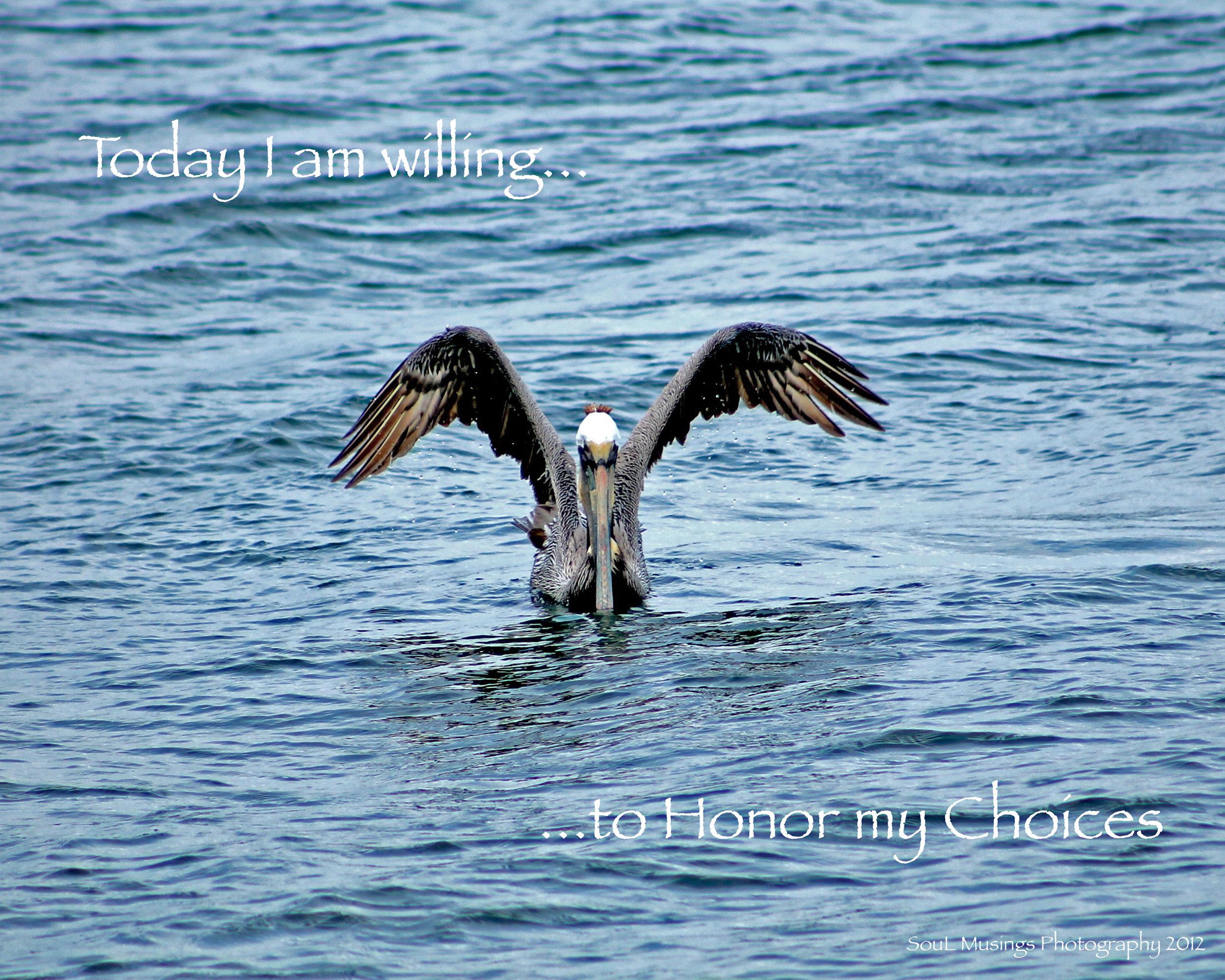 Pelican_Choices.jpg