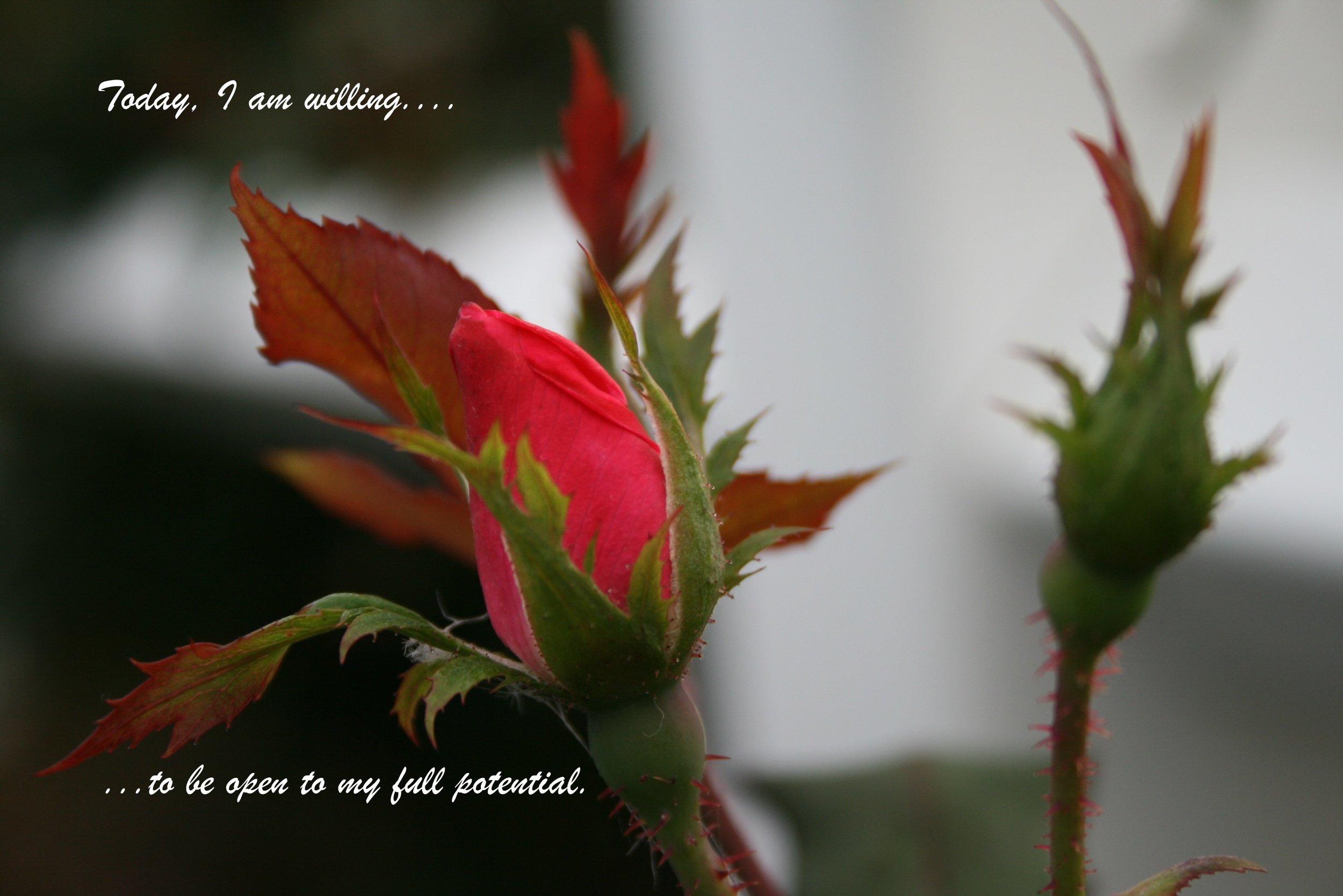 Rosebud_be open to my full potential.jpg