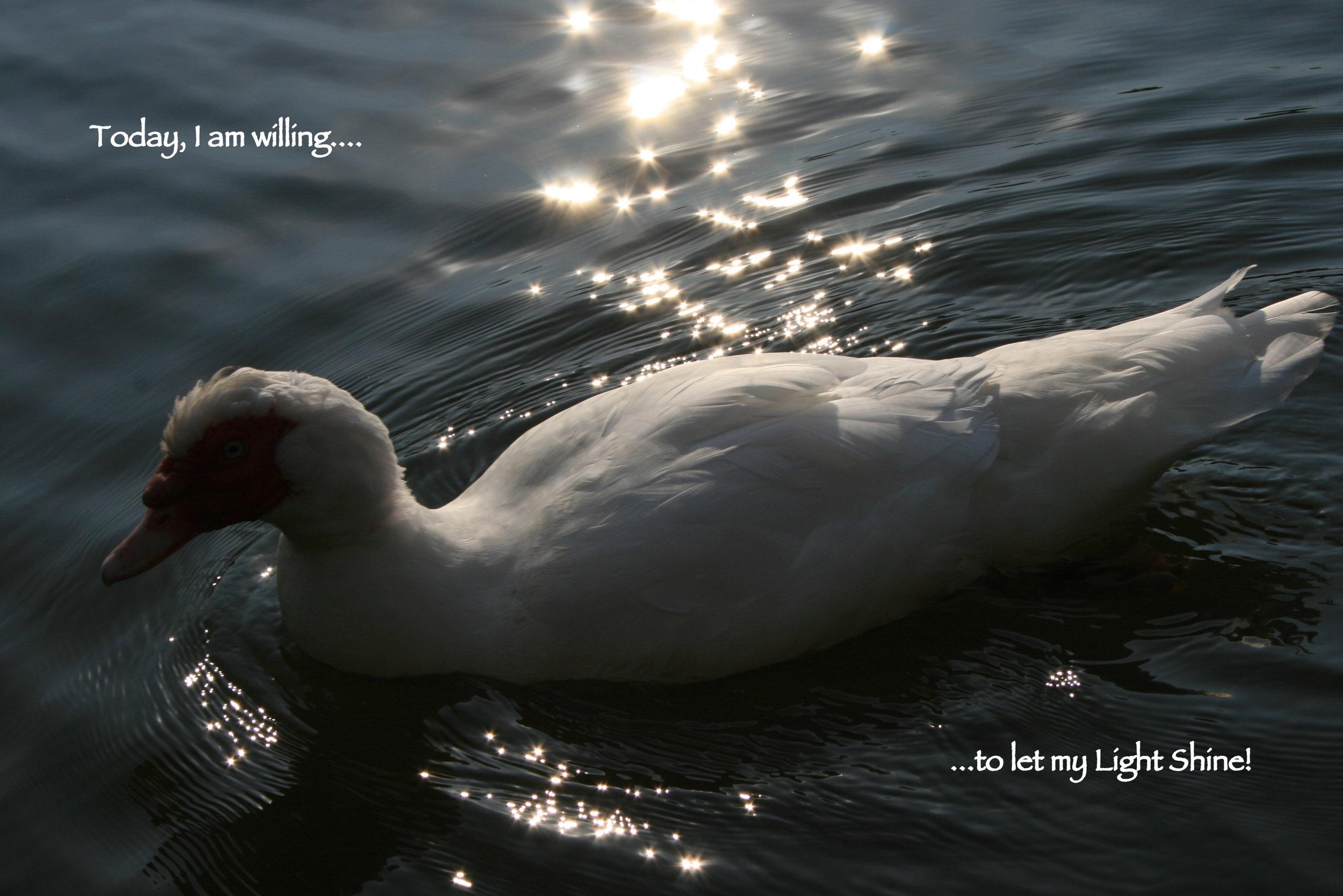 White goose_let my light shine.JPG