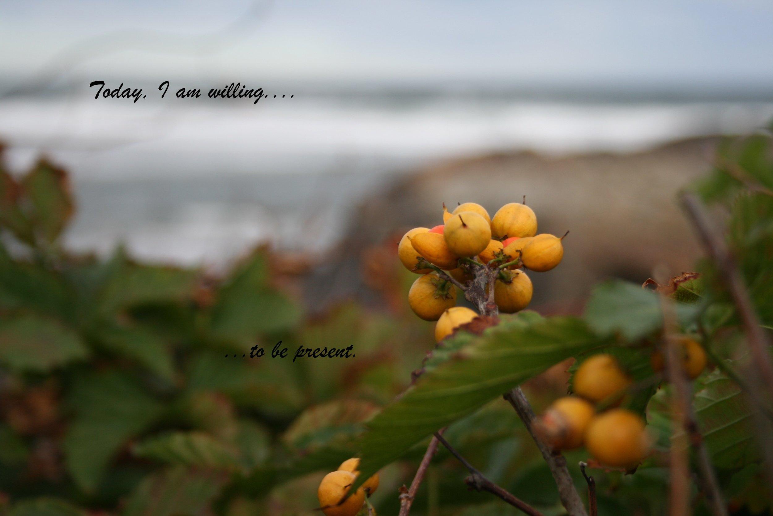 Yellow Berries_to be present-1.jpg