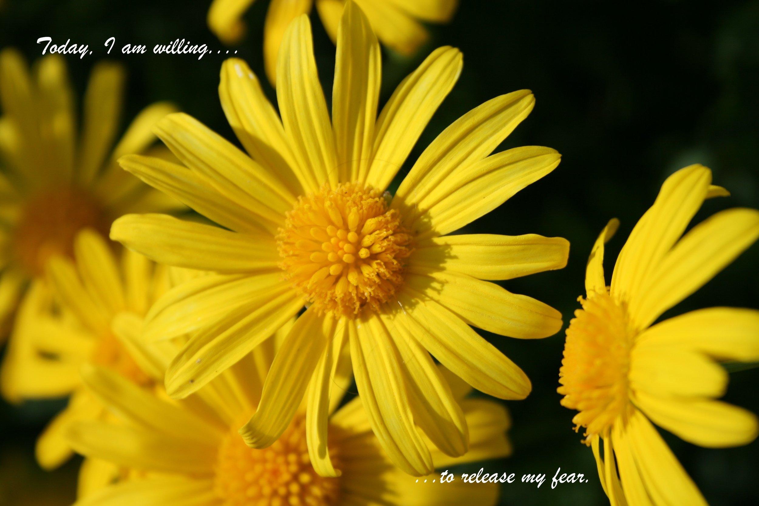 Yellow flower_release my fear.jpg