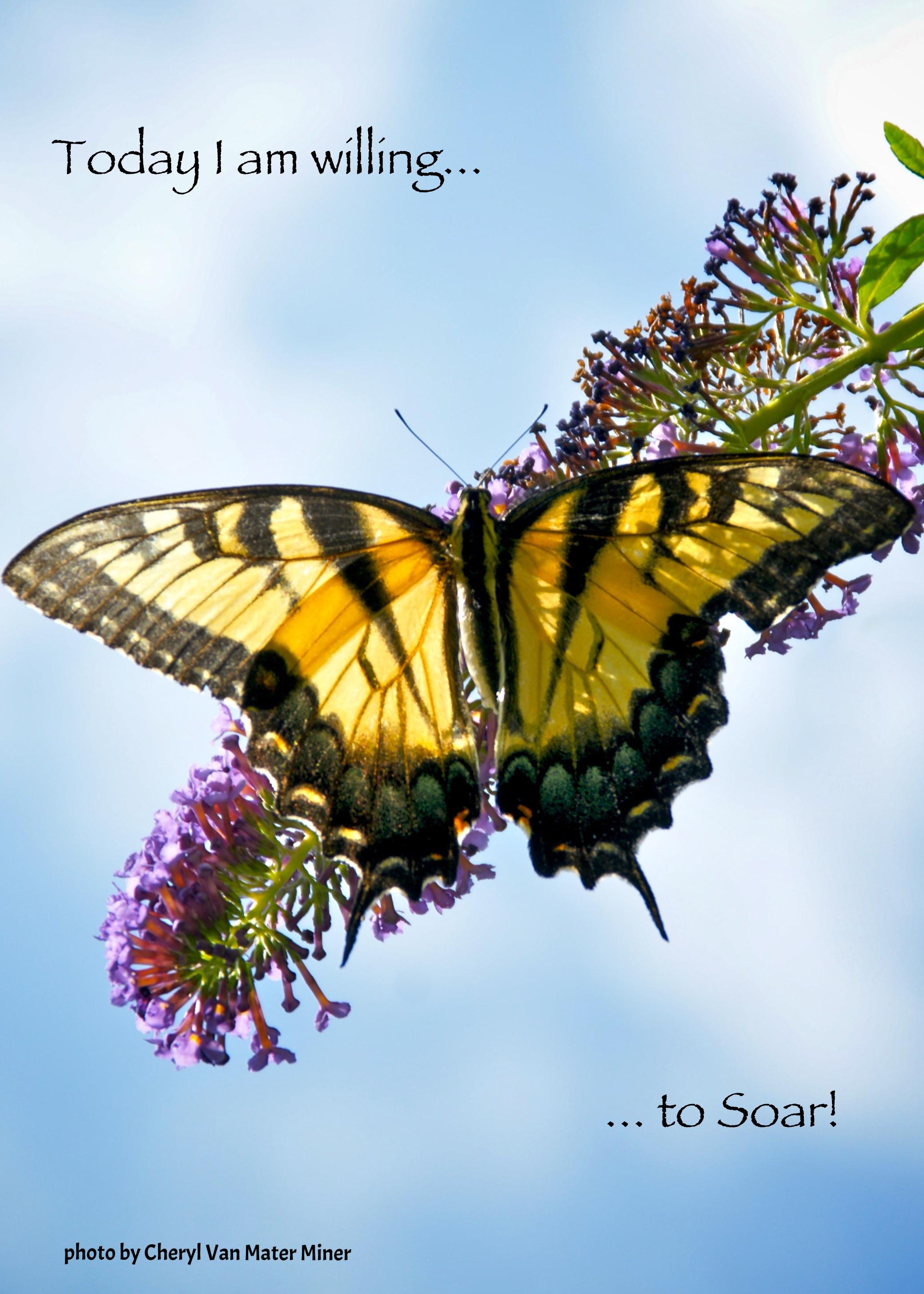 Cheryl's Swallowtail, Willing to soar.jpg