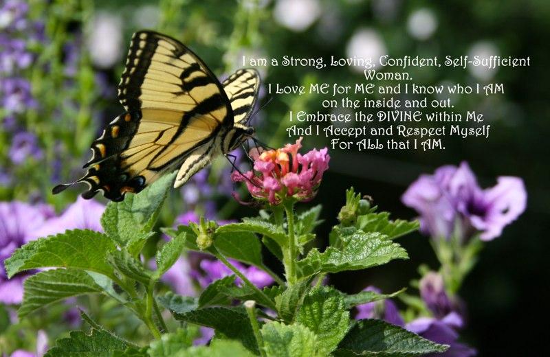 """Divine Swallowtail"" Hamilton, NJ"