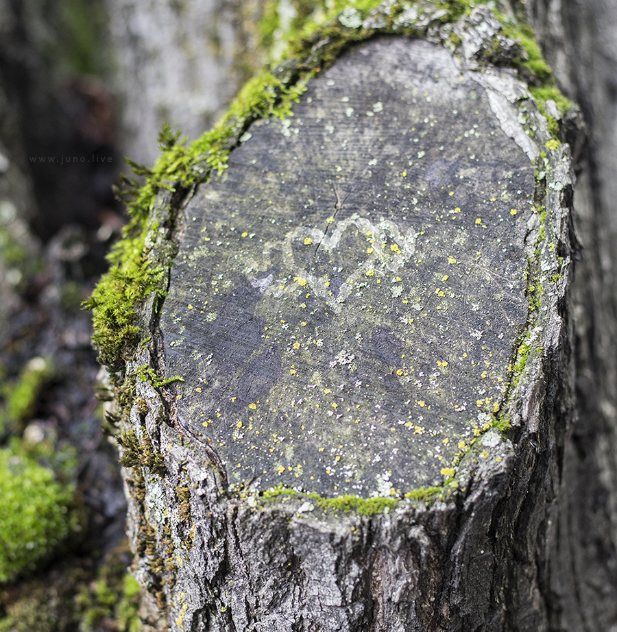 A heart imprinted on a tree stump, surrounded by green moss.