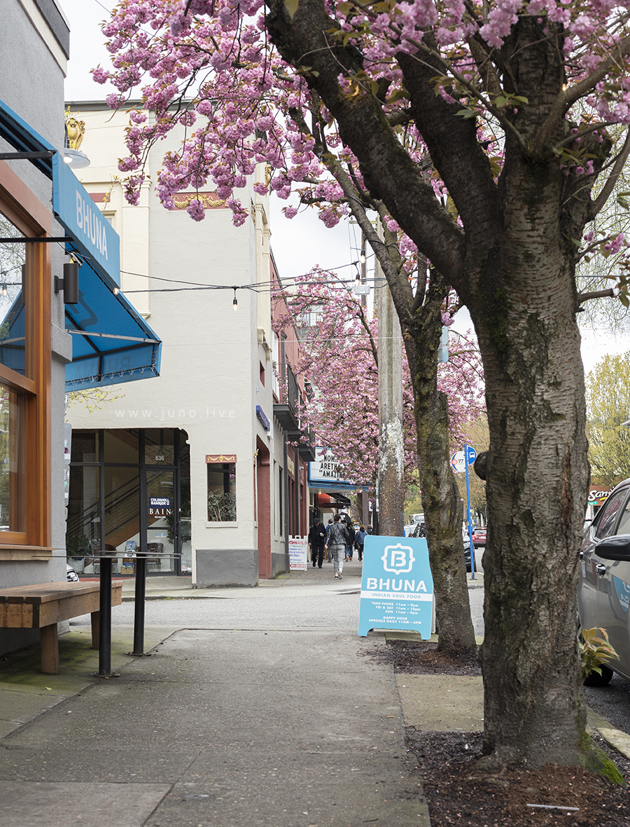 A view of the sidewalk down NW 21st Ave in downtown Portland, Oregon. This is during the spring when the tree blossoms bloom and fall.