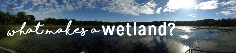 A panoramic view of the Watershed Nature Center's wetland habitat. Photo by Kelsey Degeneffe-Tarazi