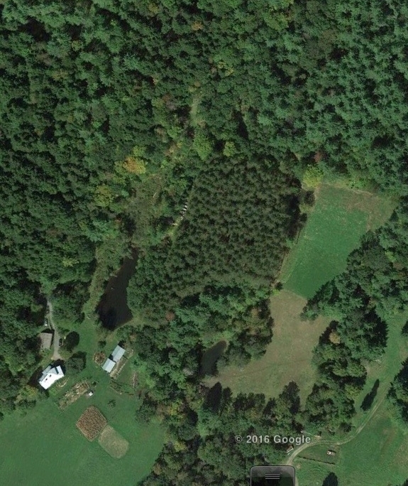 Vermont is about 95% forested. Our farm is surrounded by deep forest.