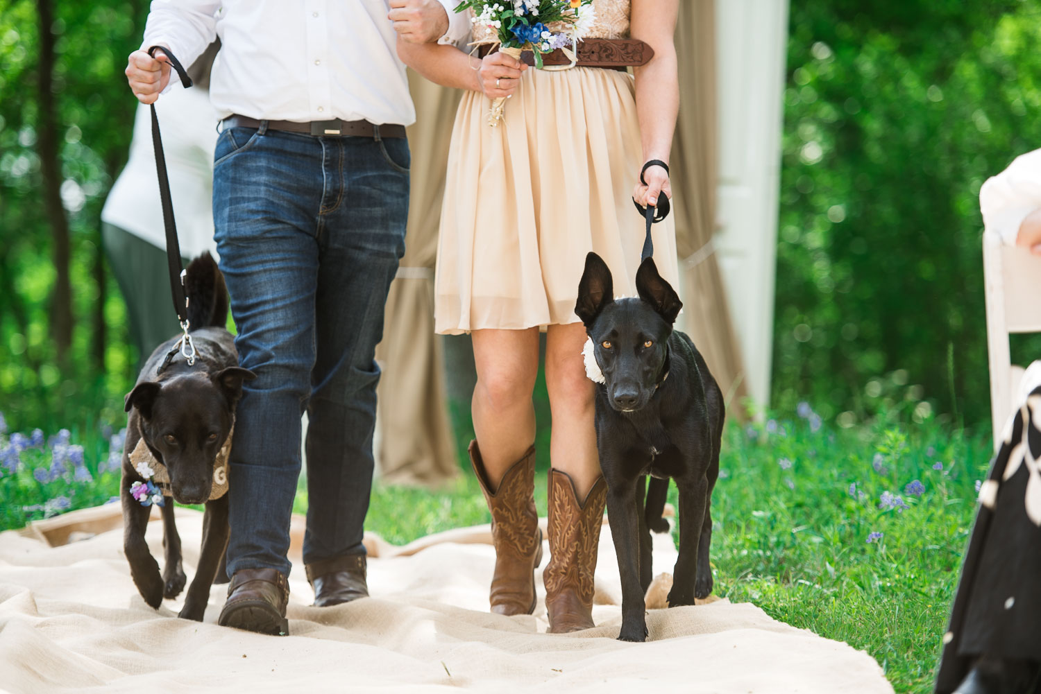32 Dogs in a wedding on the Watson Family Ranch in Luling Texas.jpg