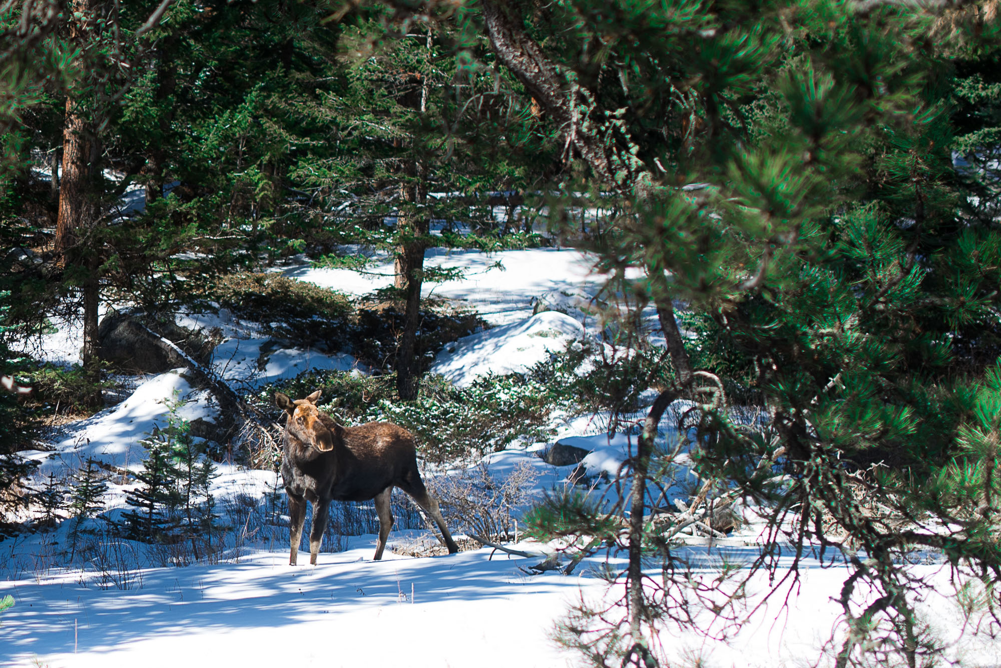 Trip to Estes Park Colorado-1.jpg