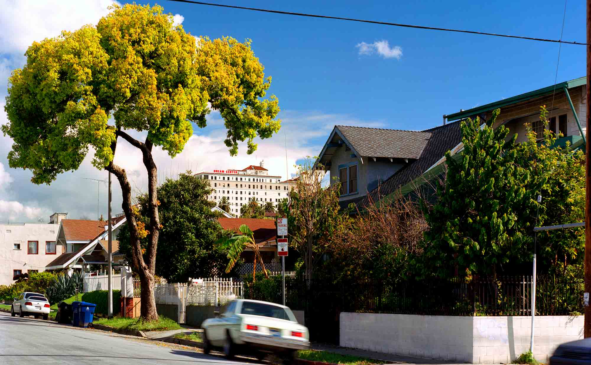 04-Camphor-Tree-#5,-Filipinotown,-2005.jpg