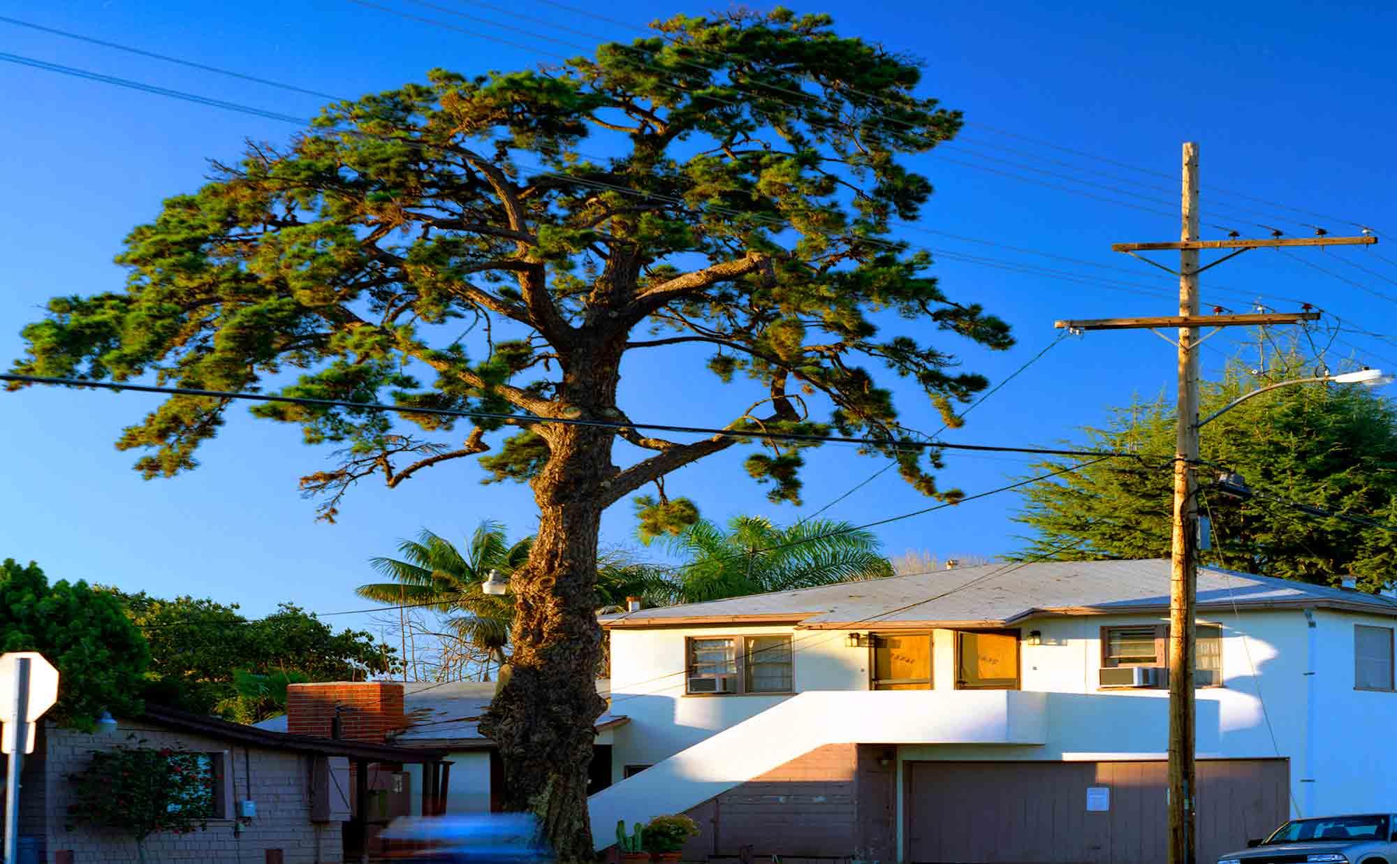 17-Pine-#9,-Lomita,-2005.jpg