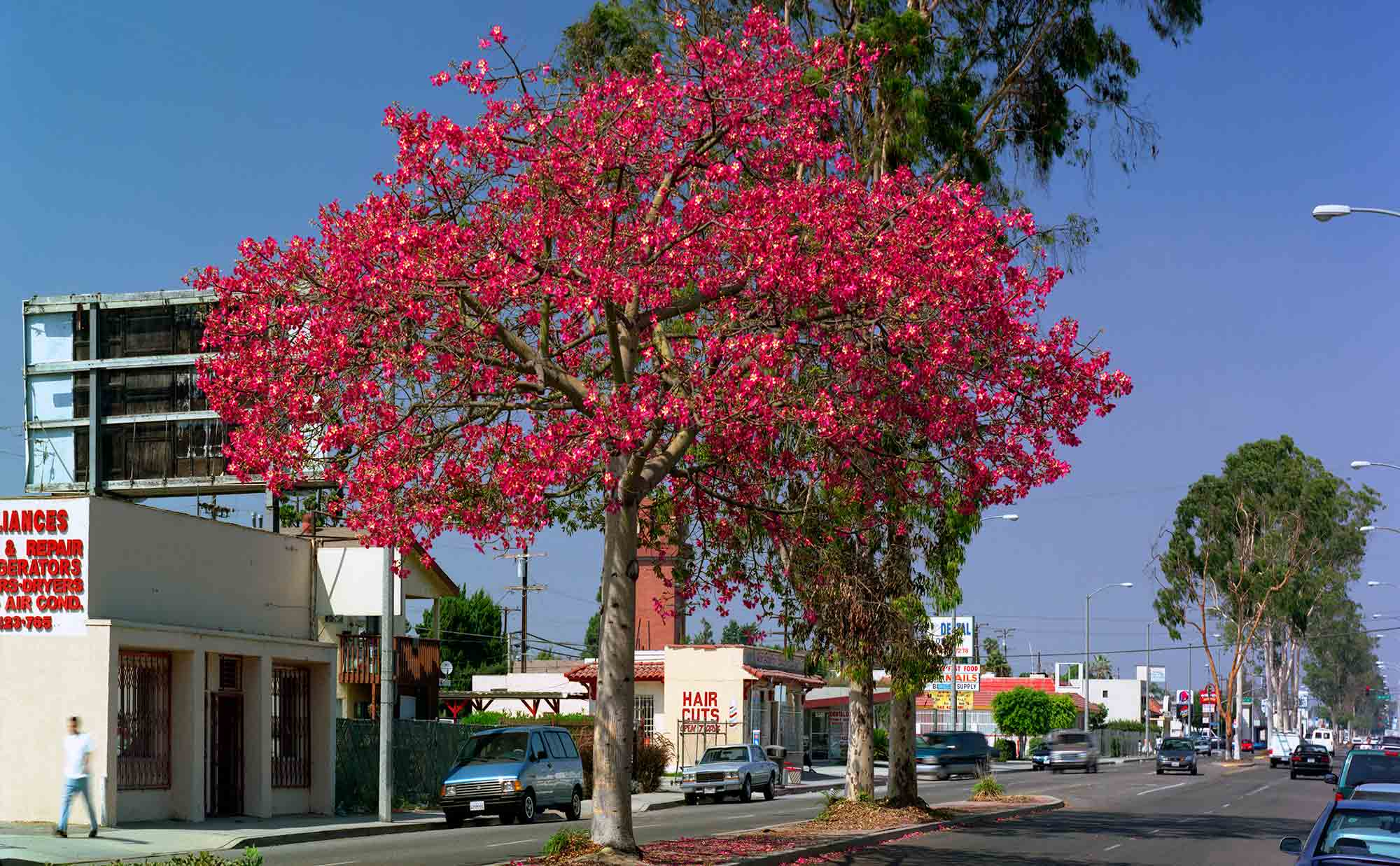 24-Floss-Silk-Tree-#4,-North-Long-Beach,-2004.jpg