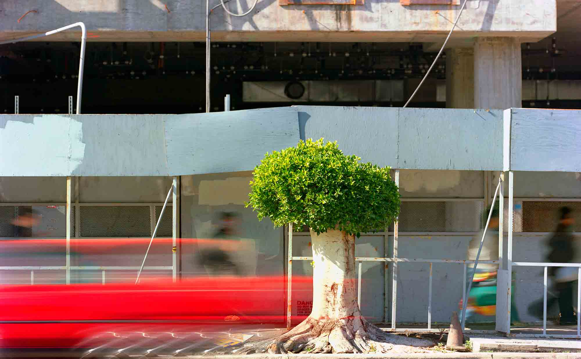 44-Ficus-#18,-Los-Angeles,-2006-(485x3).jpg