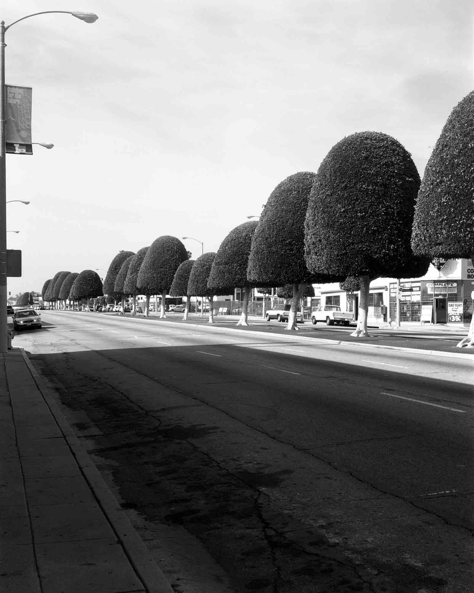 06-Ficus-#3.jpg
