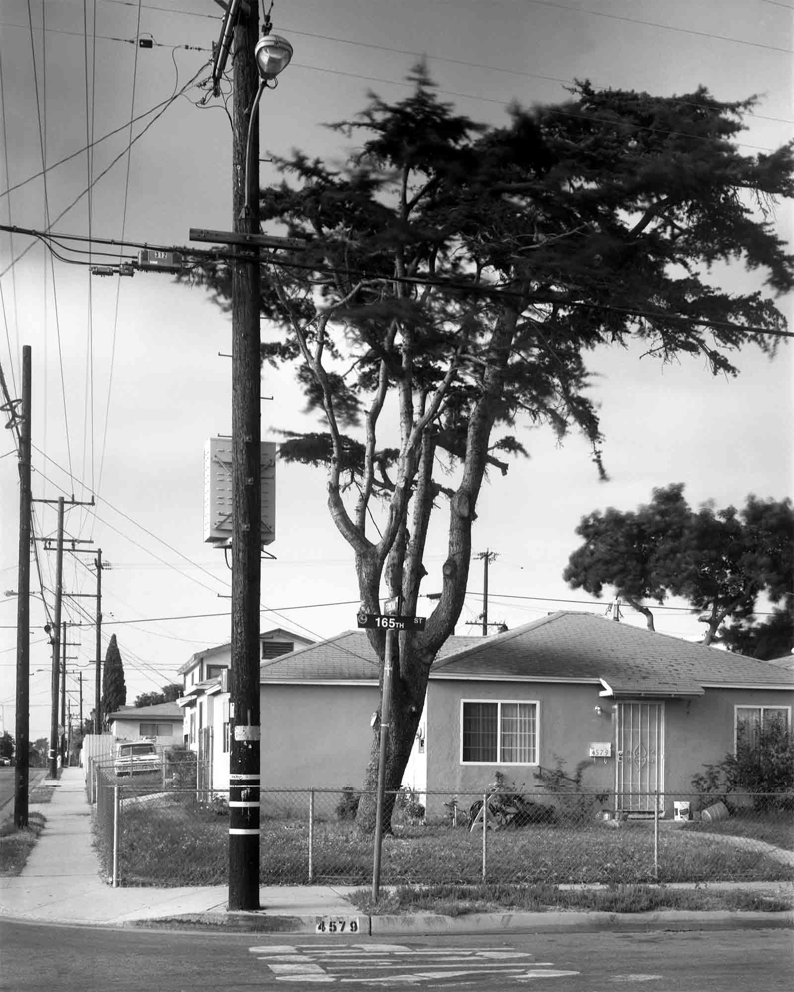 05-Cedar-#10.jpg