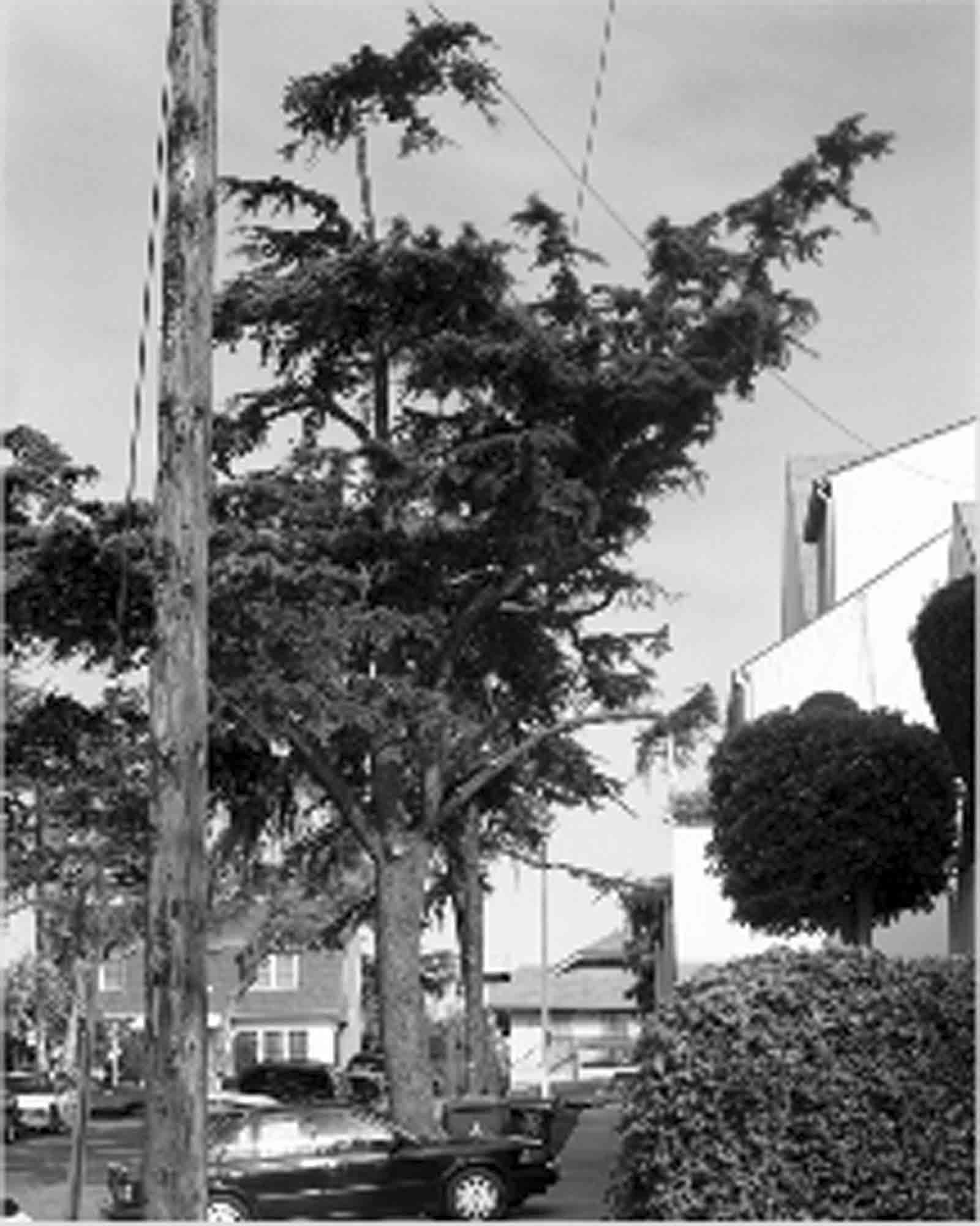 07-Cedar-#2-v2.jpg
