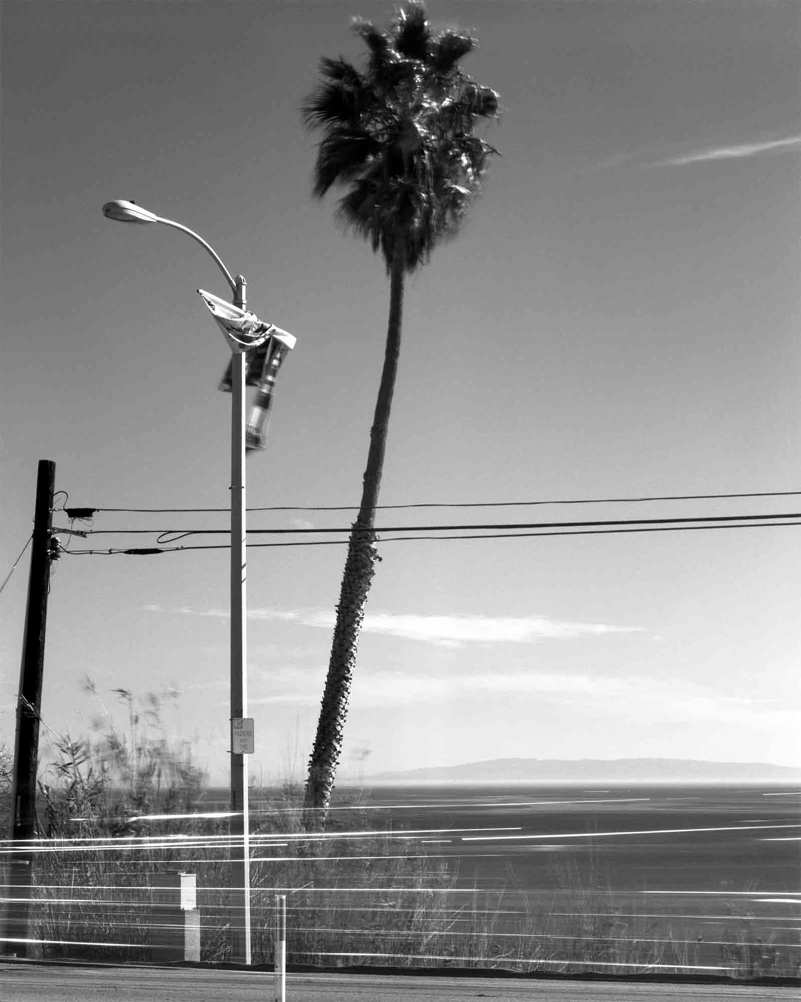 12-Palm-#13.jpg