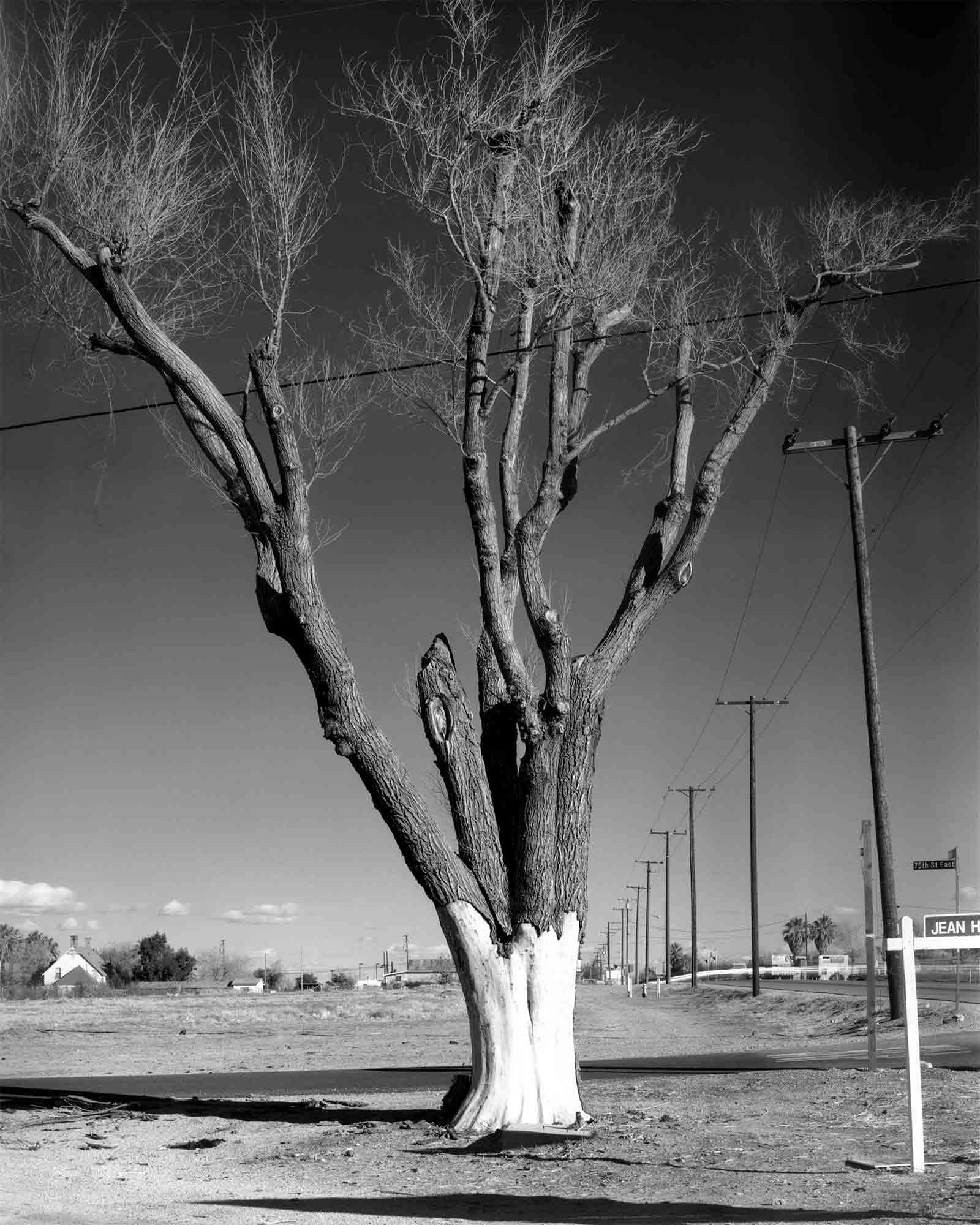 14-Cottonwood-#4.jpg