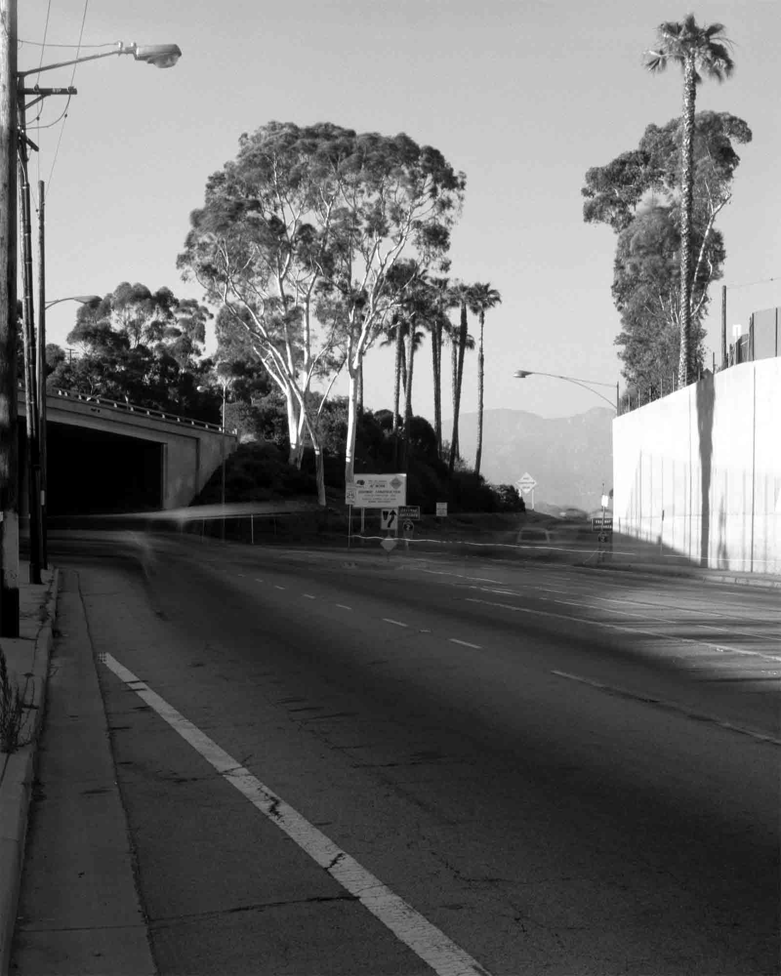 17-Eucalyptus-#7-v2.jpg