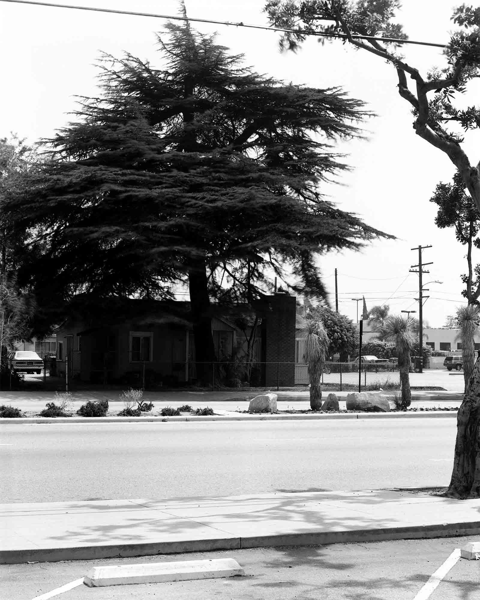 30-Cedar-#7.jpg