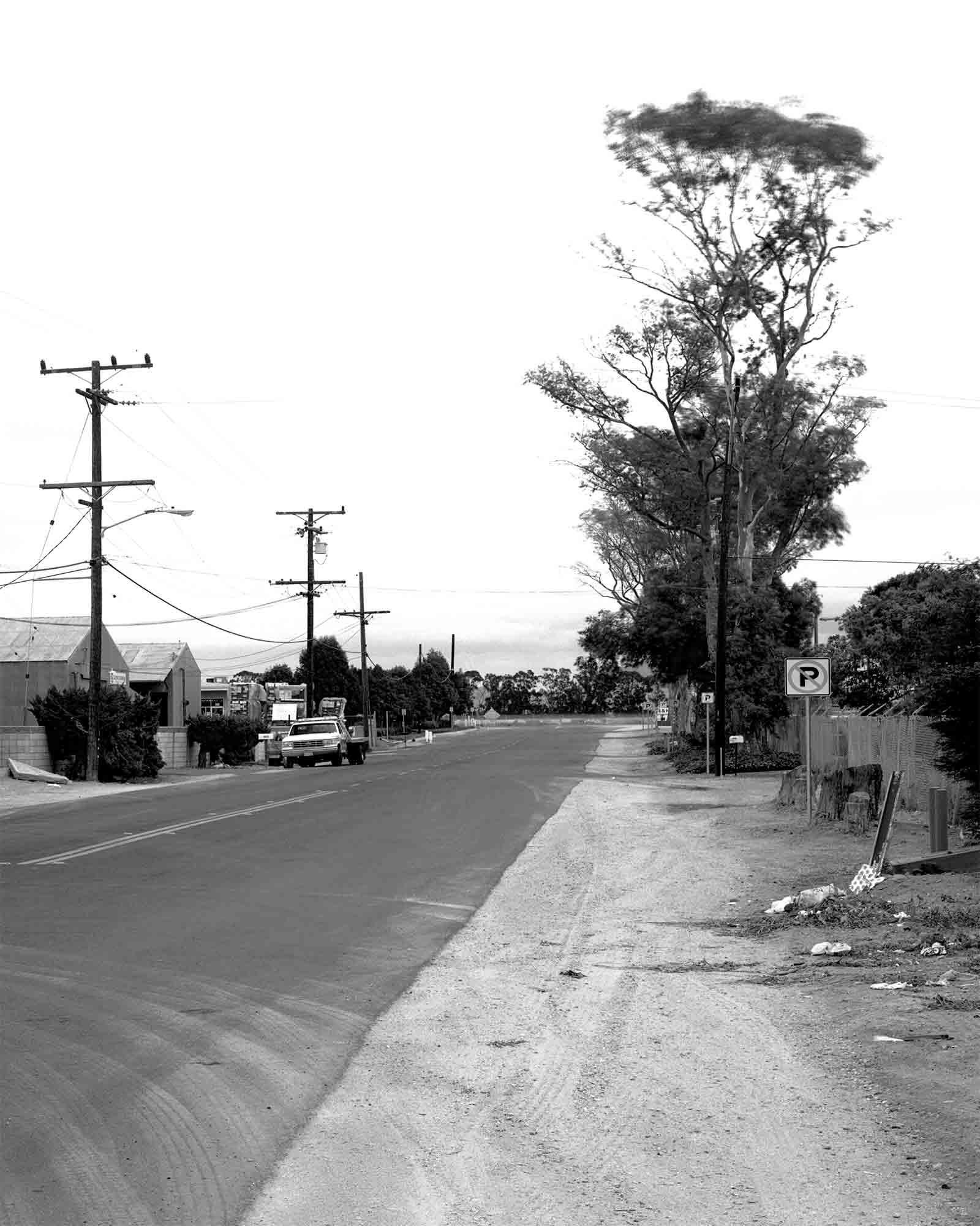 32-Eucalyptus-#2-v2.jpg