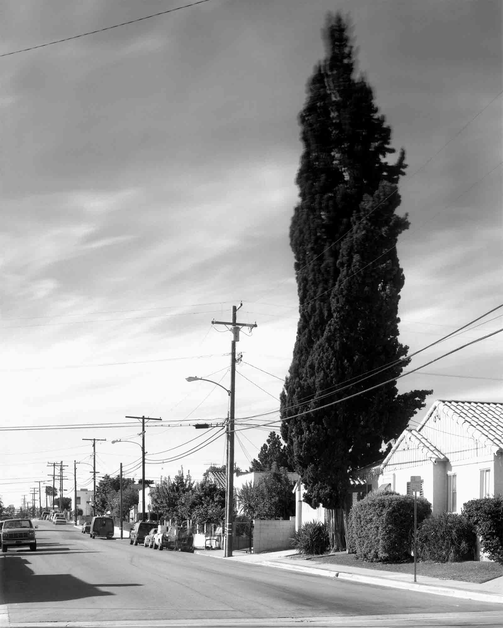 40-Cypress-#7.jpg