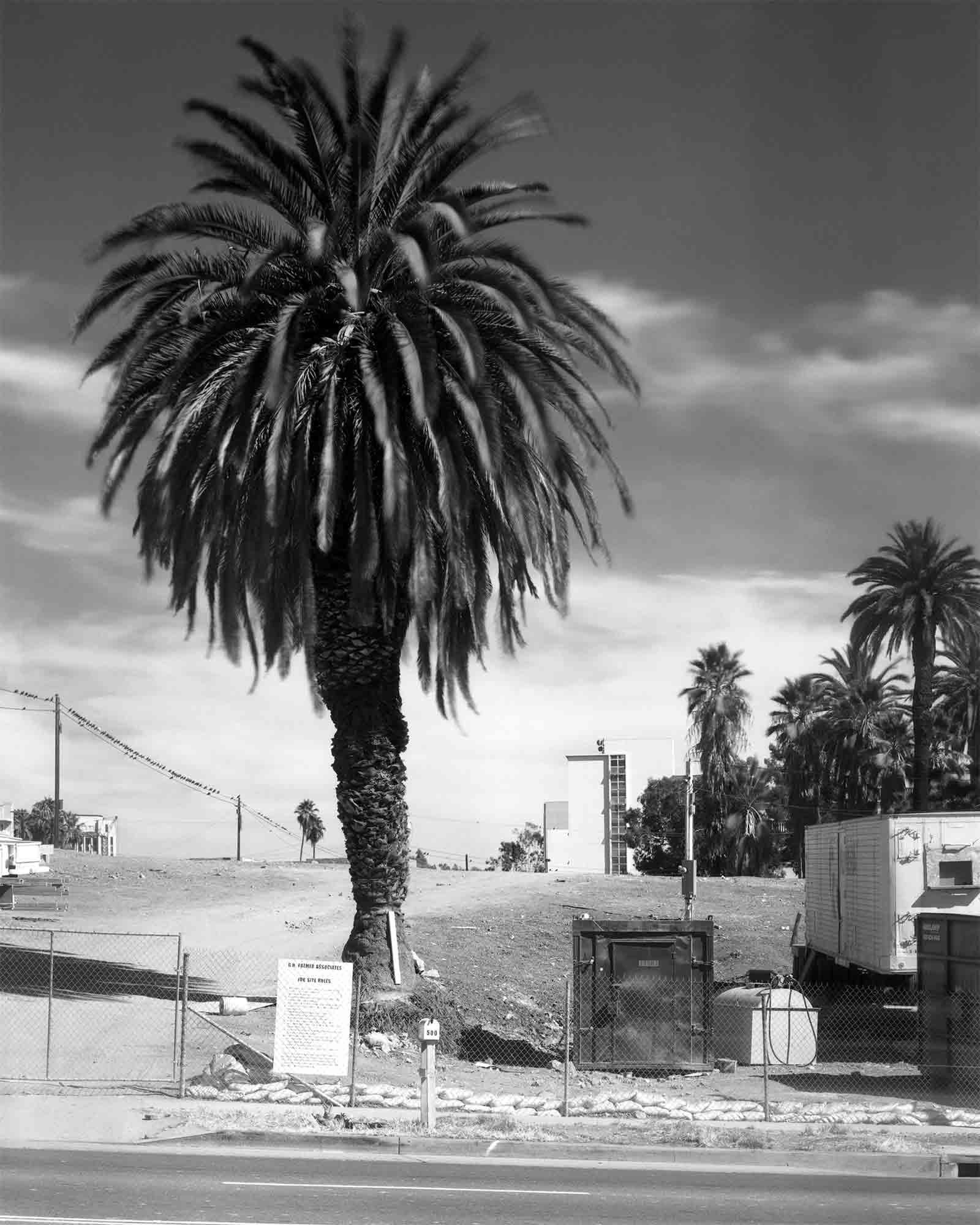 45-Palm-#11.jpg