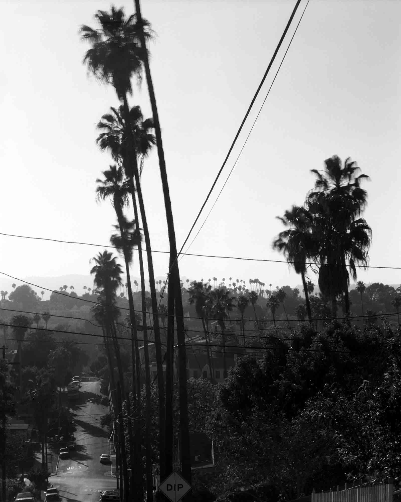 48-Palm-#7.jpg