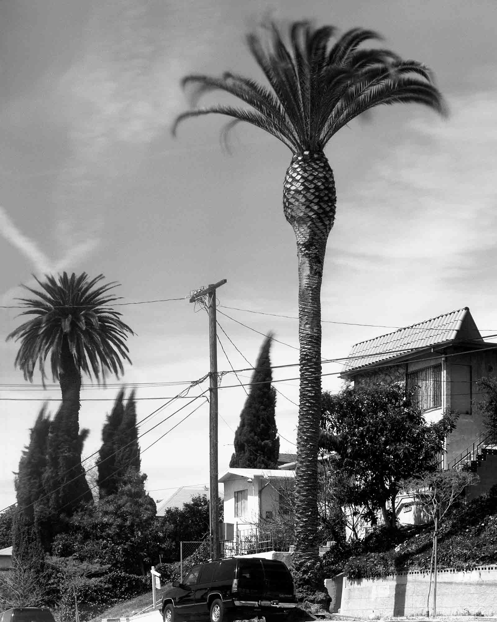 04-Palm-#18,-Angelino-Heights,-2003.jpg