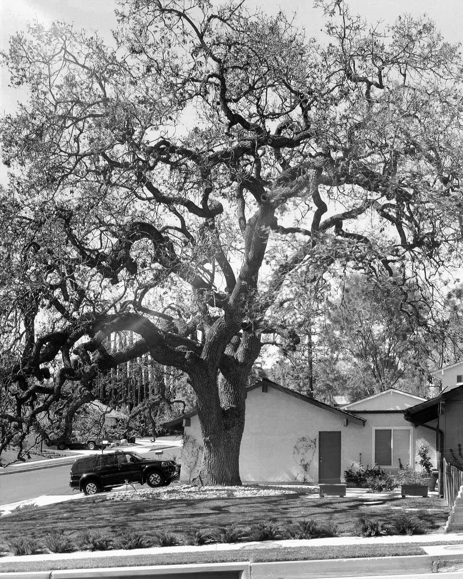 16-Live-Oak-#11,-Thousand-Oaks,-2003.jpg