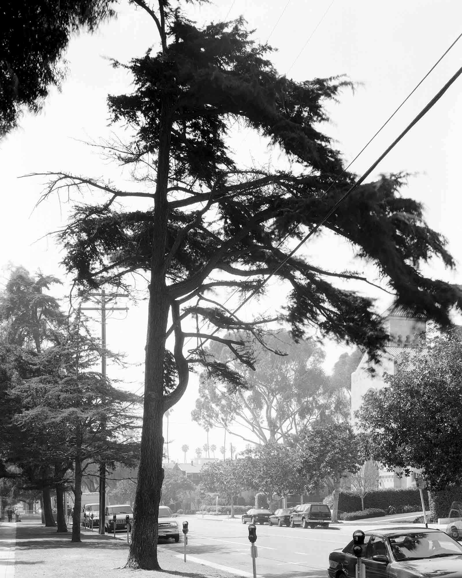 18-Cedar-#15,-Santa-Monica,-2003.jpg