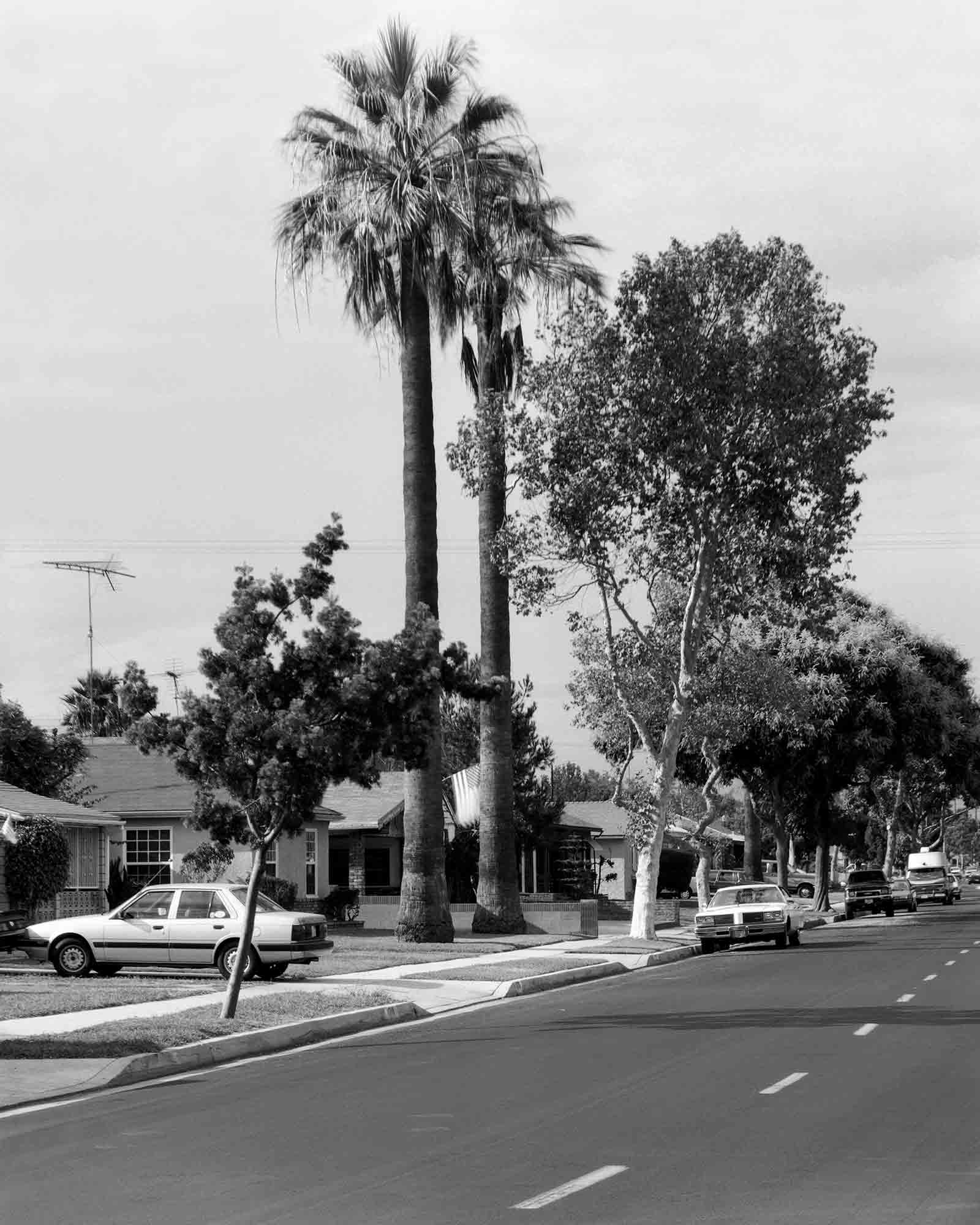 22-Palm-#12,-Lawndale,-2002.jpg