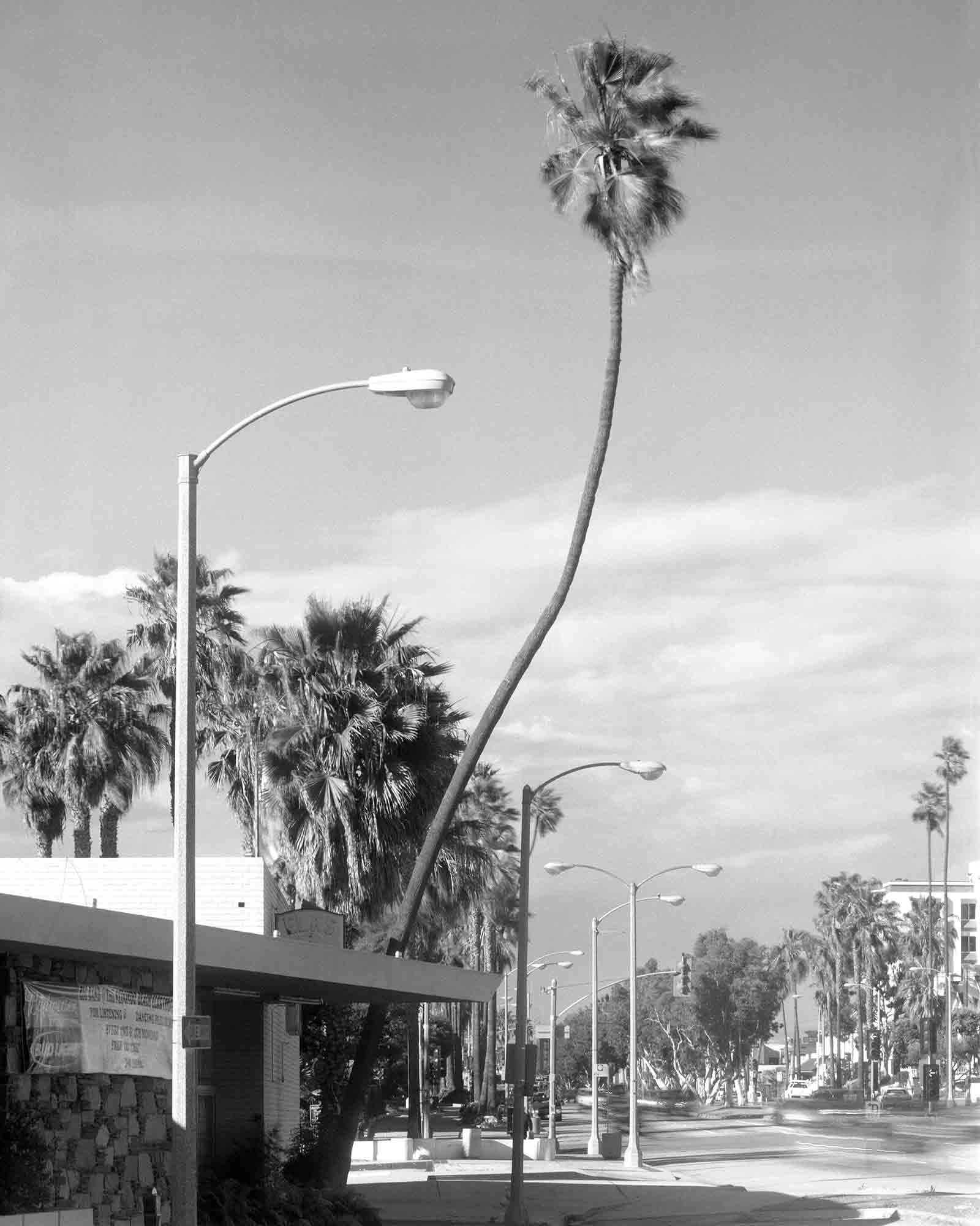 26-Palm-#35,-Redondo-Beach,-2004.jpg