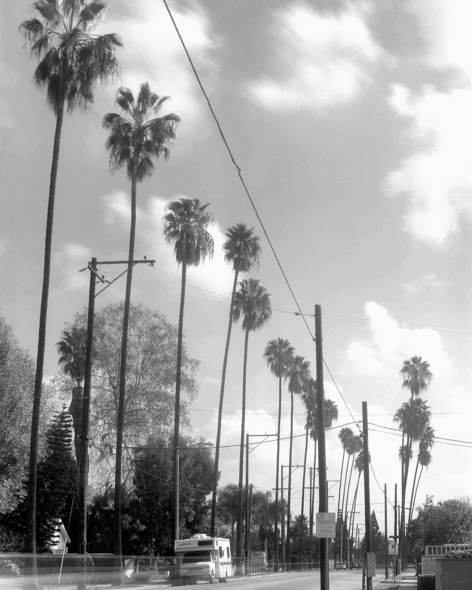 35-Palm-#14,-Downey,-2003.jpg