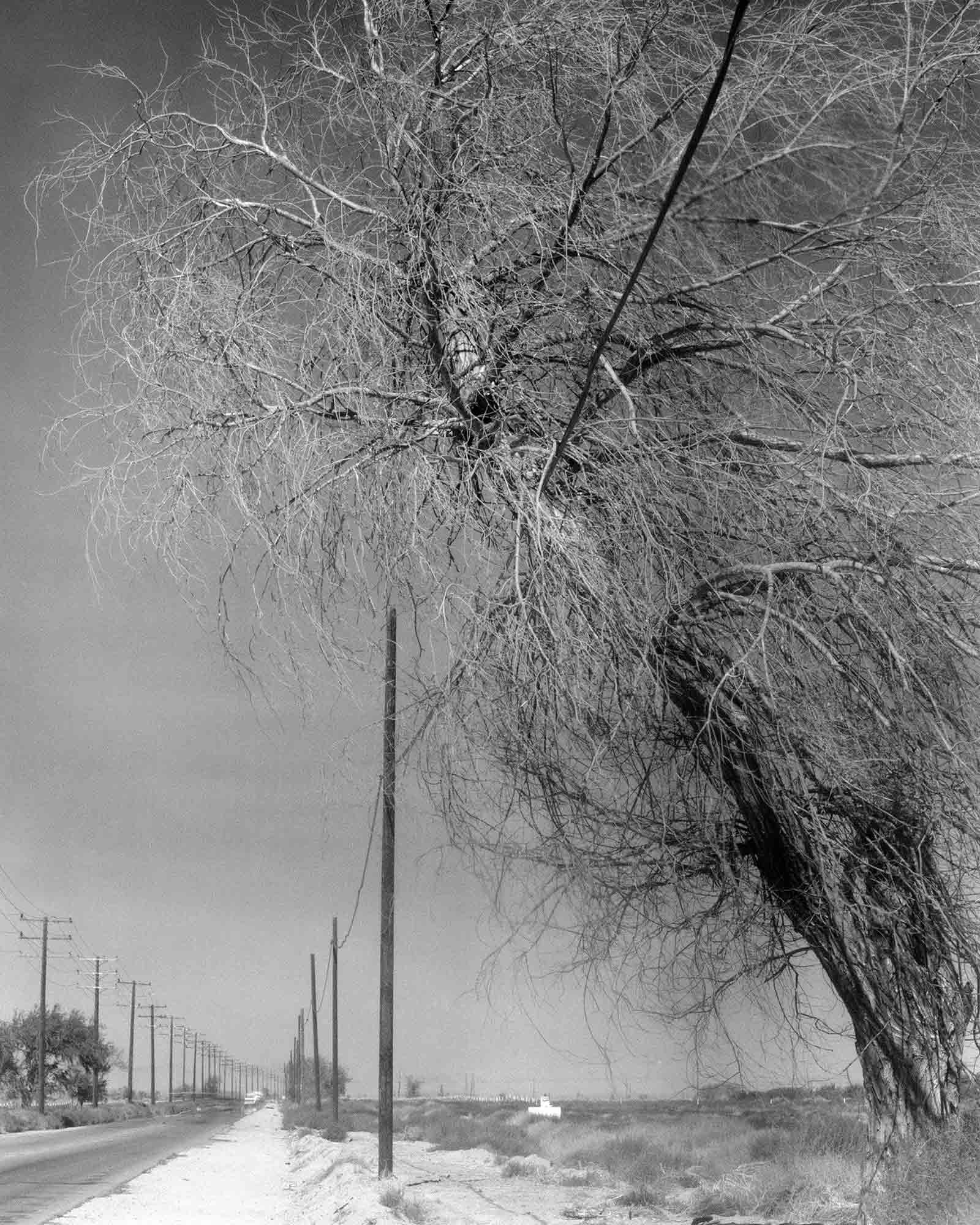 43-Cottonwood-#6,-Lancaster,-2002.jpg