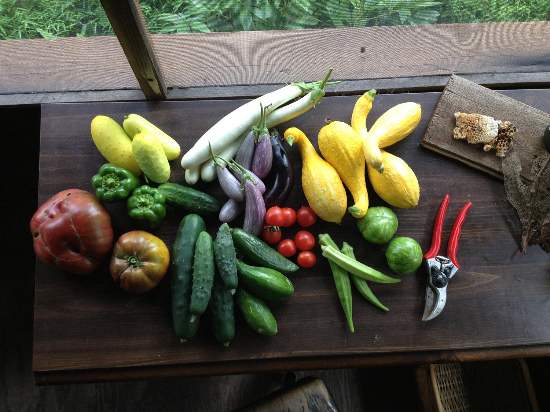 harvest.web.jpg