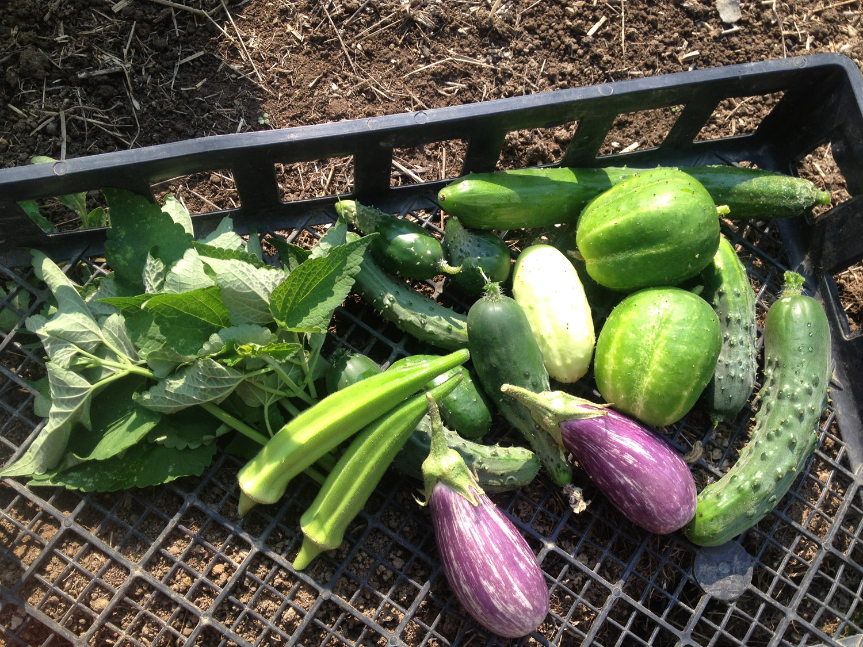 vegharvest.web.jpg