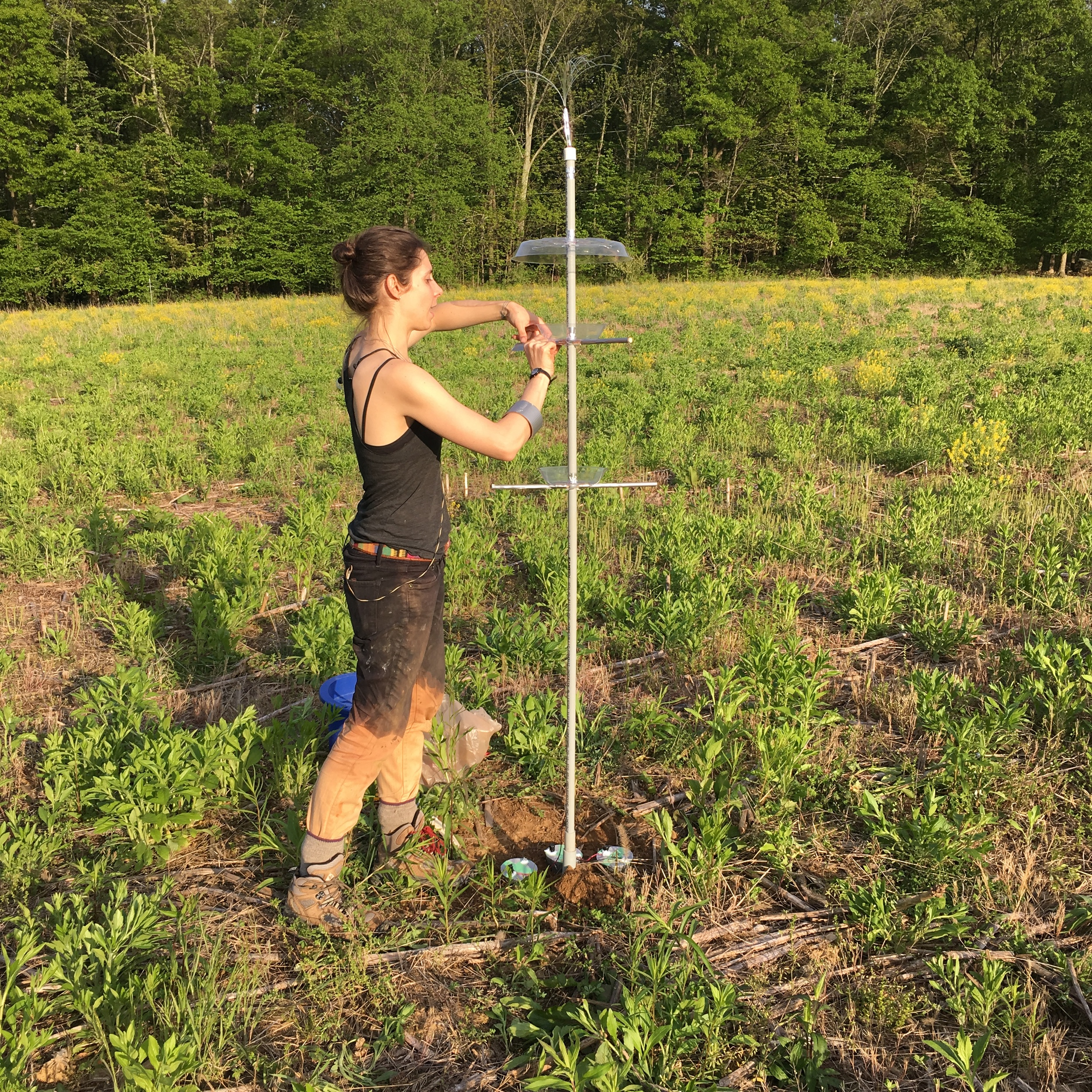 Installing active bird/soil feeder.
