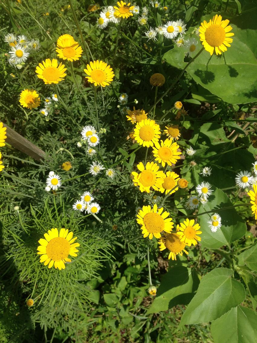 yellowflower.web.jpg