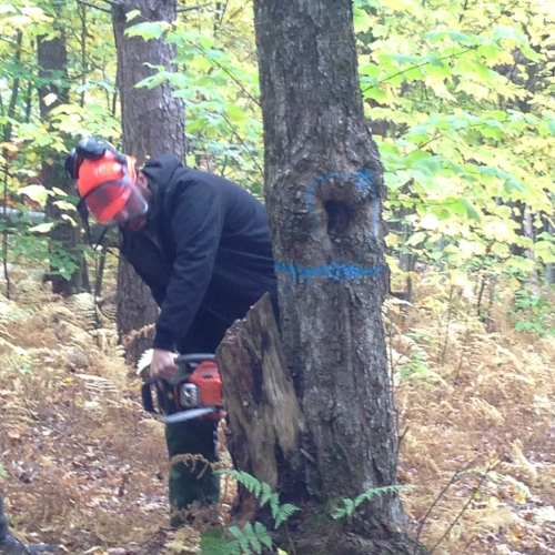 Matt didn't take a picture of me with my tree - #Husbandfail. As revenge, here he is starting on his tree, with a couple of safety violations. Can you spot them?