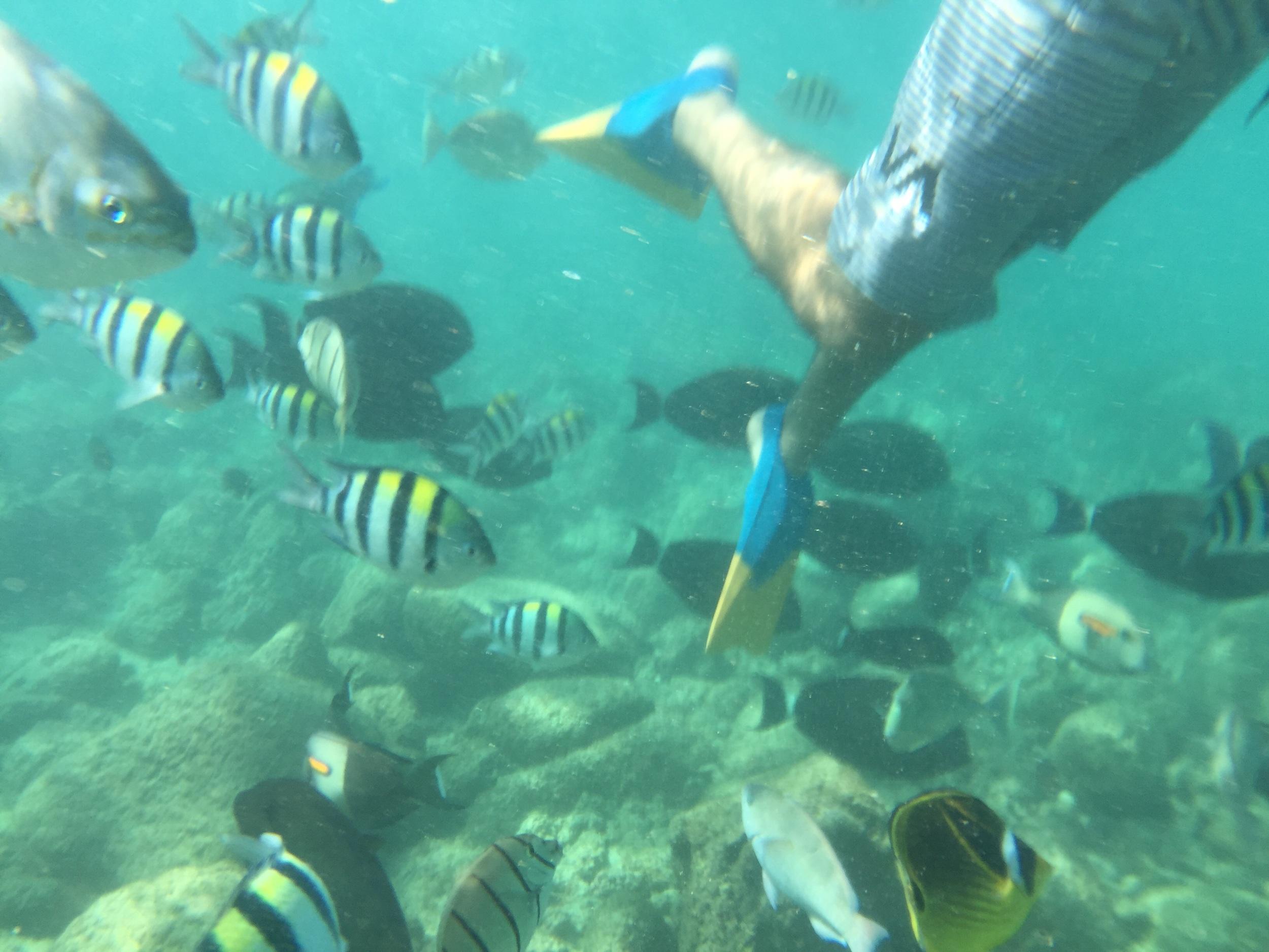 Swarm of fish at Poipu beach