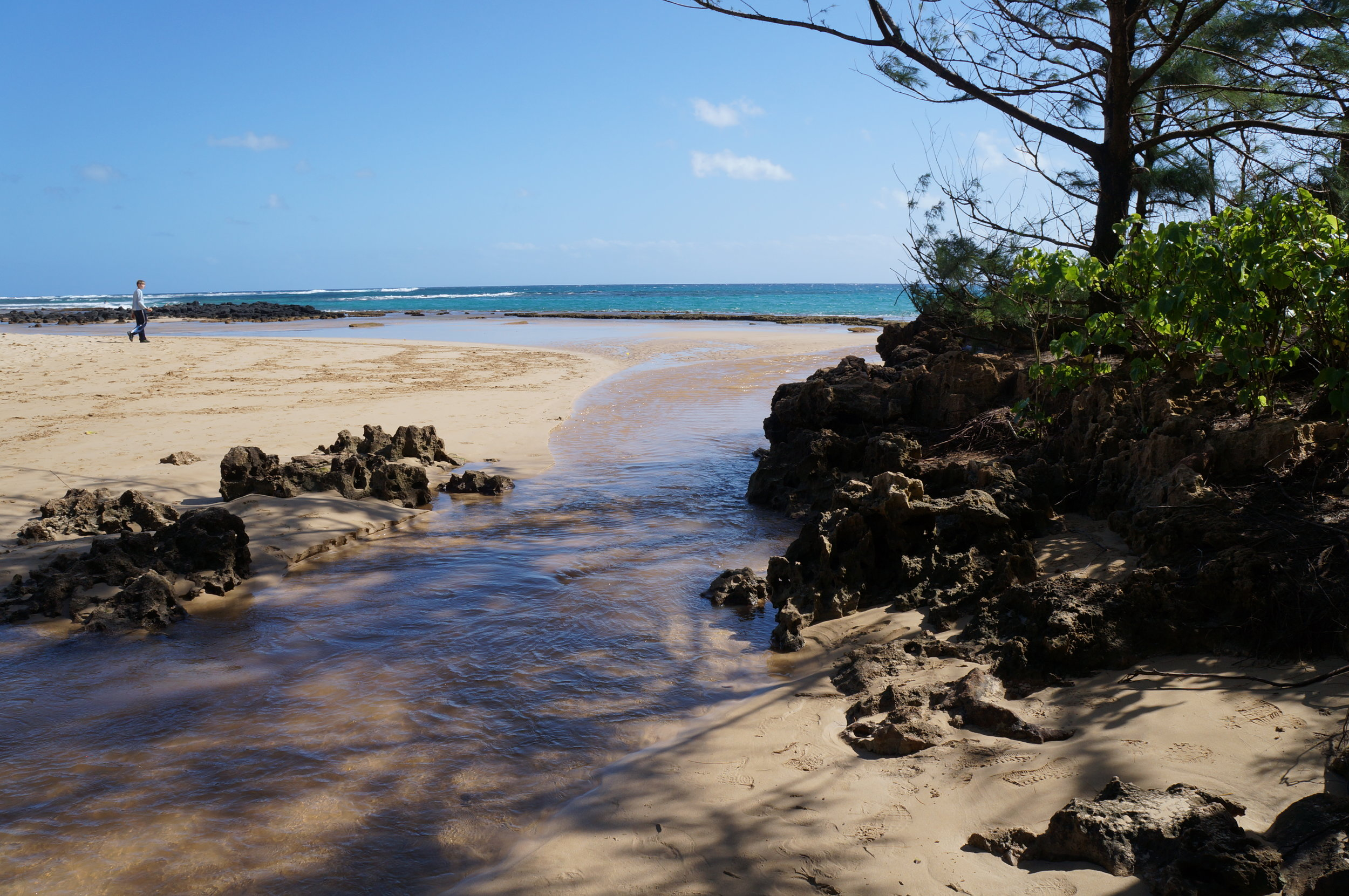 The beach at Makauwahi Cave Reserve and Tortise Farm.