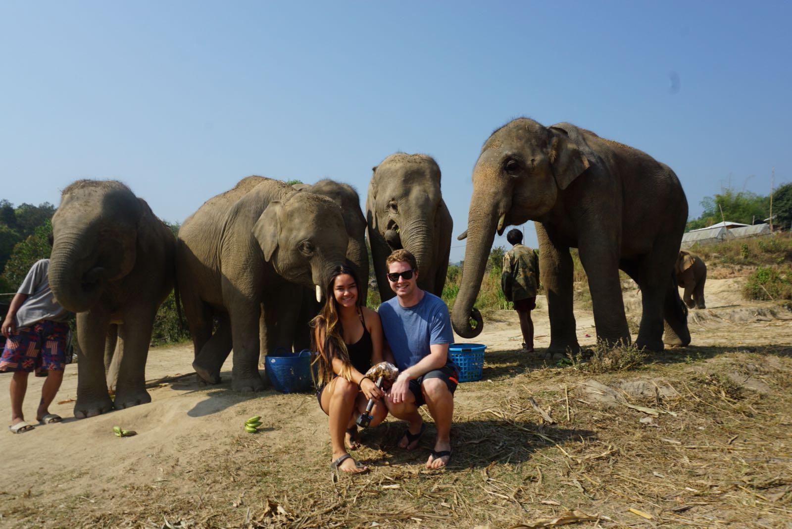 The Elephants 😍