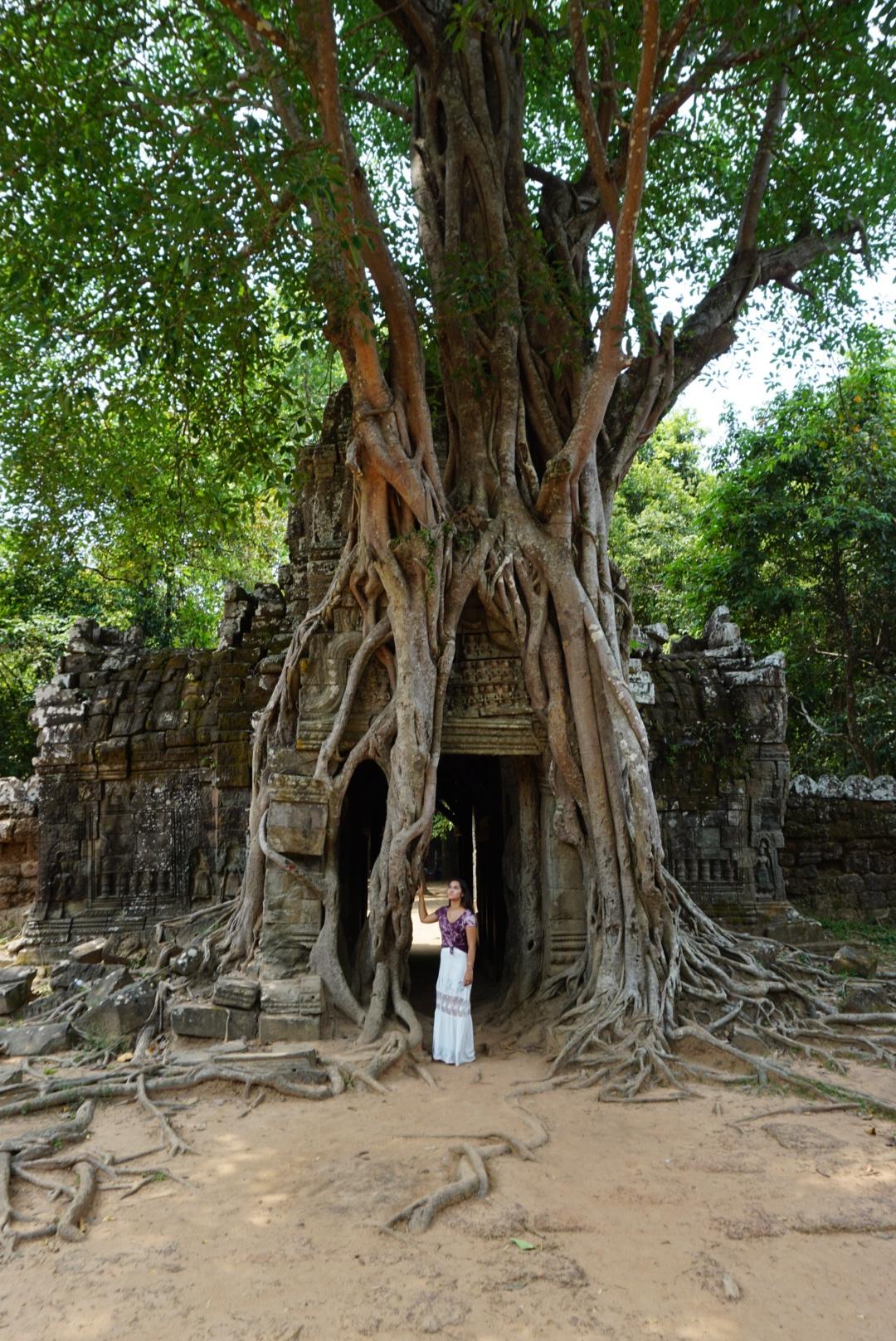 Strangler fig tree at Ta Som